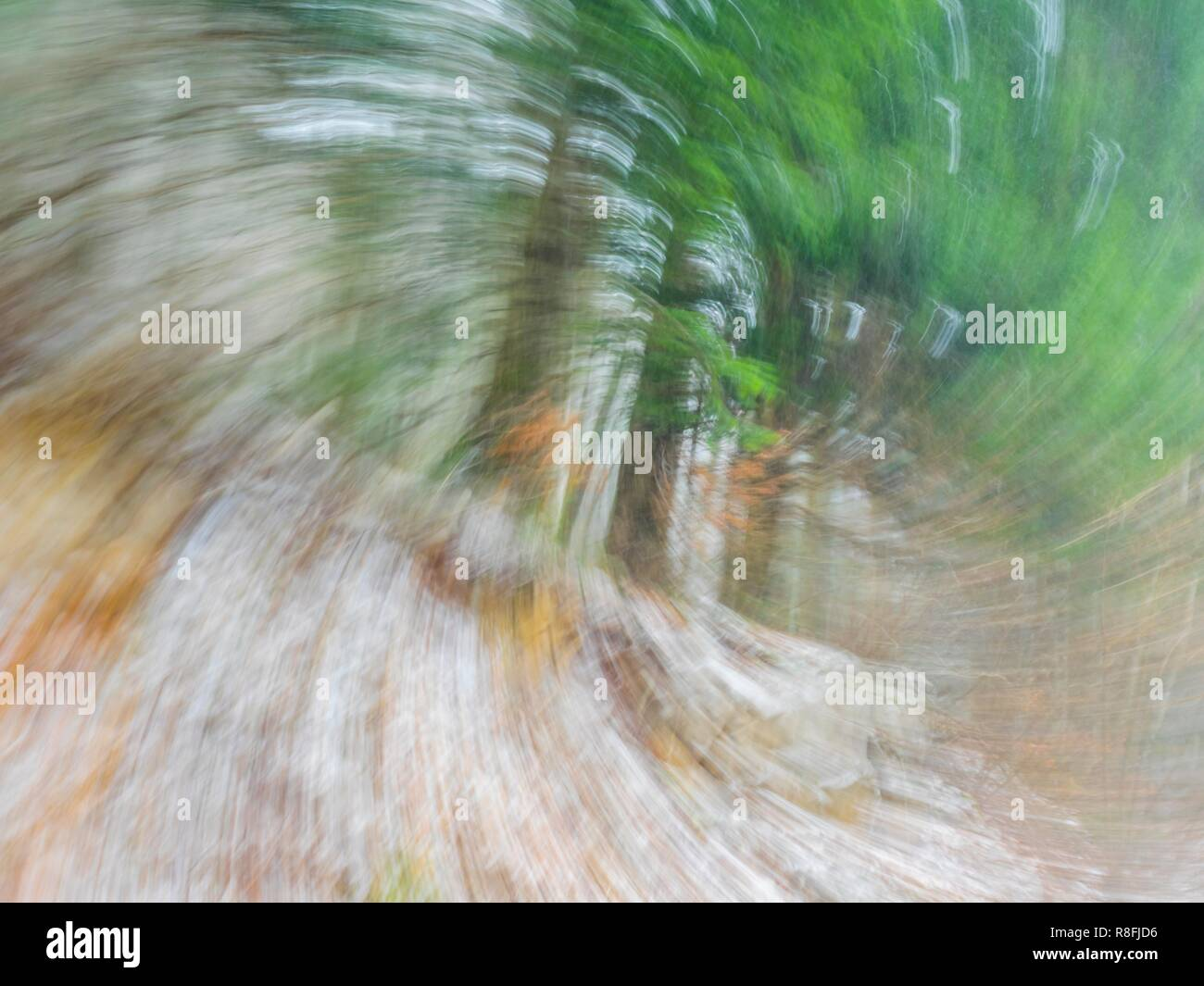 Circular blur motion forest trees - Stock Image