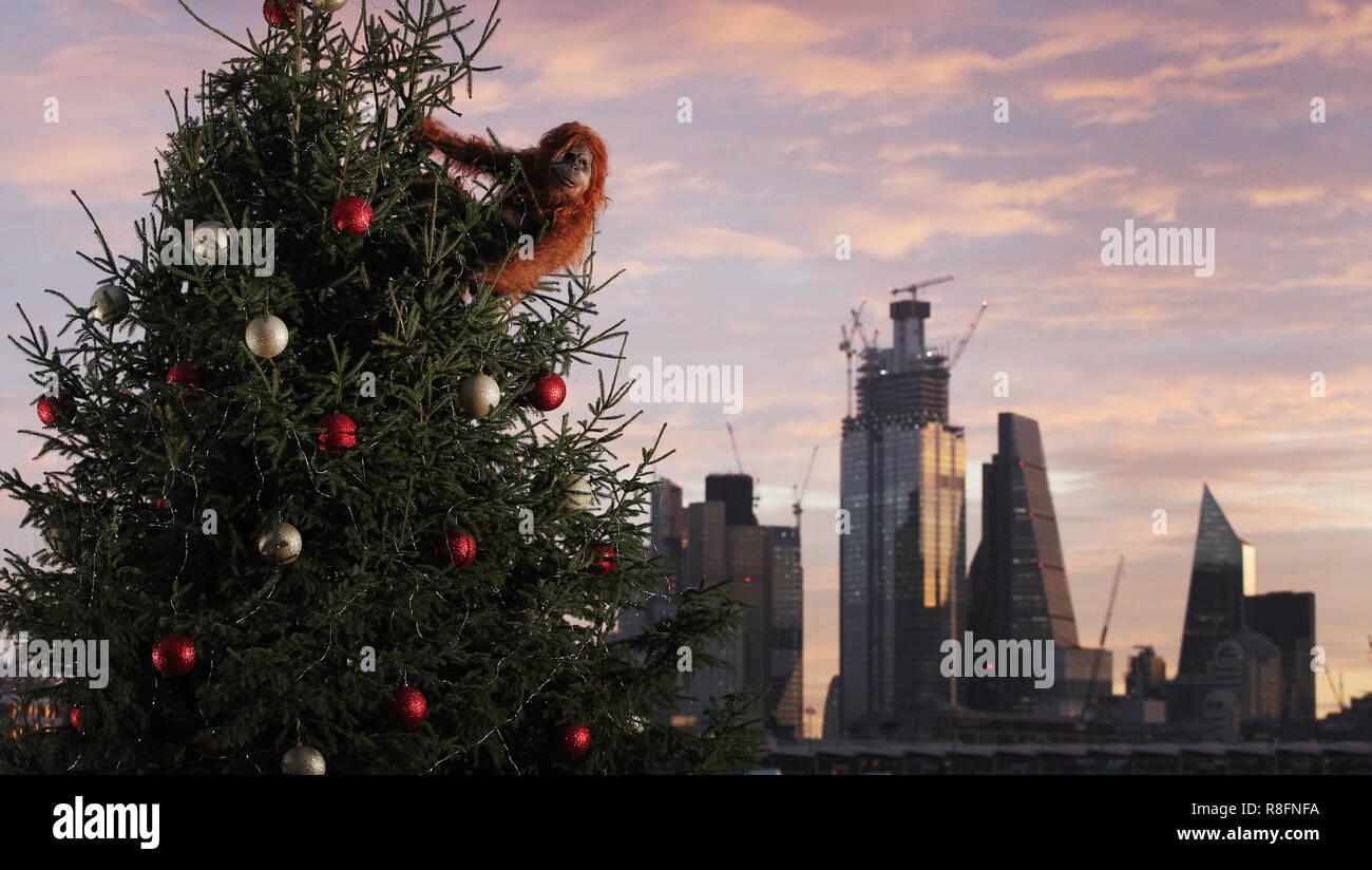 20 Ft Christmas Tree.An Ultra Realistic Animatronic Orangutan Climbs A 20ft