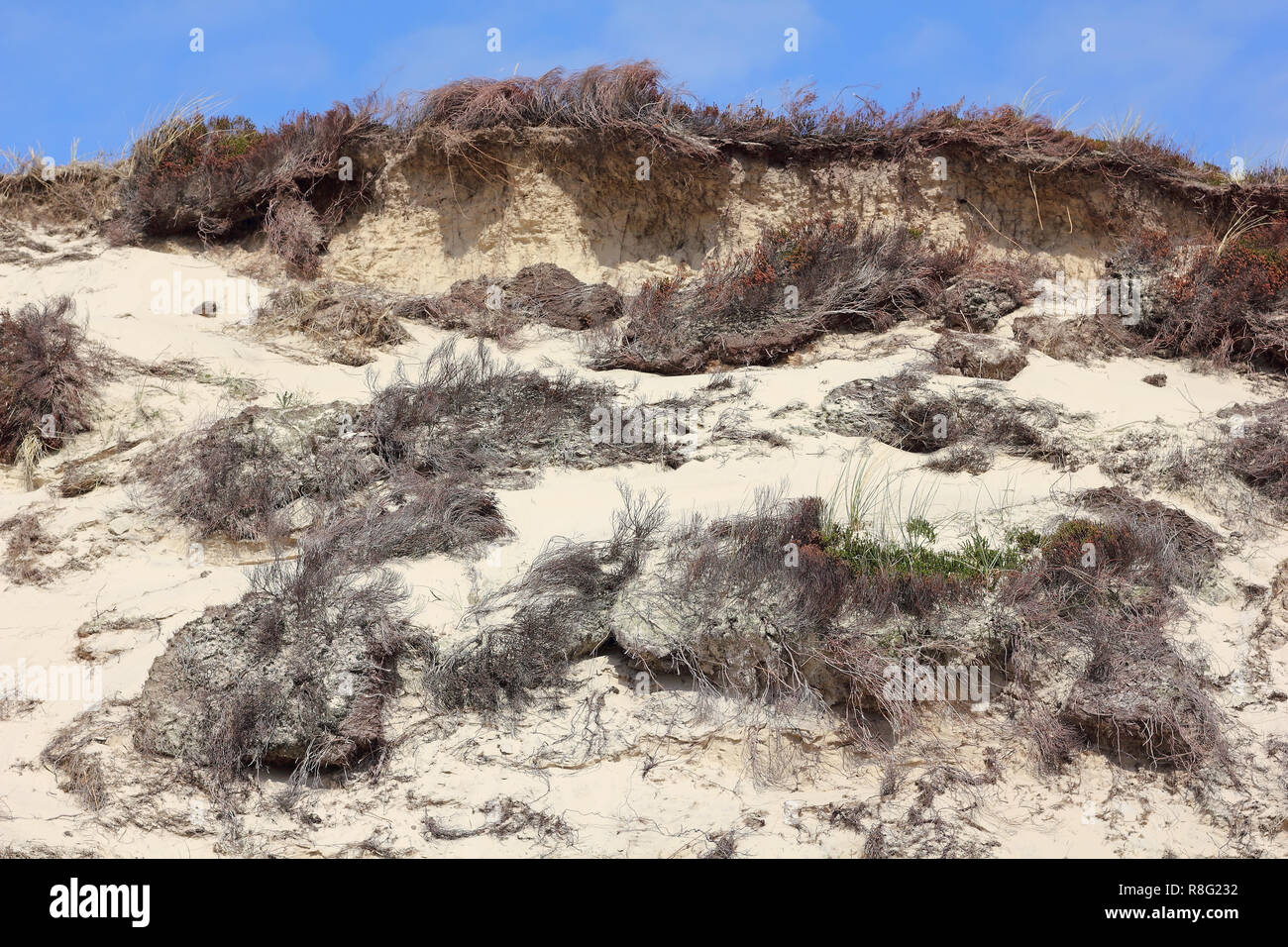 Break-line of a dune on the island of Sylt after a storm - Stock Image