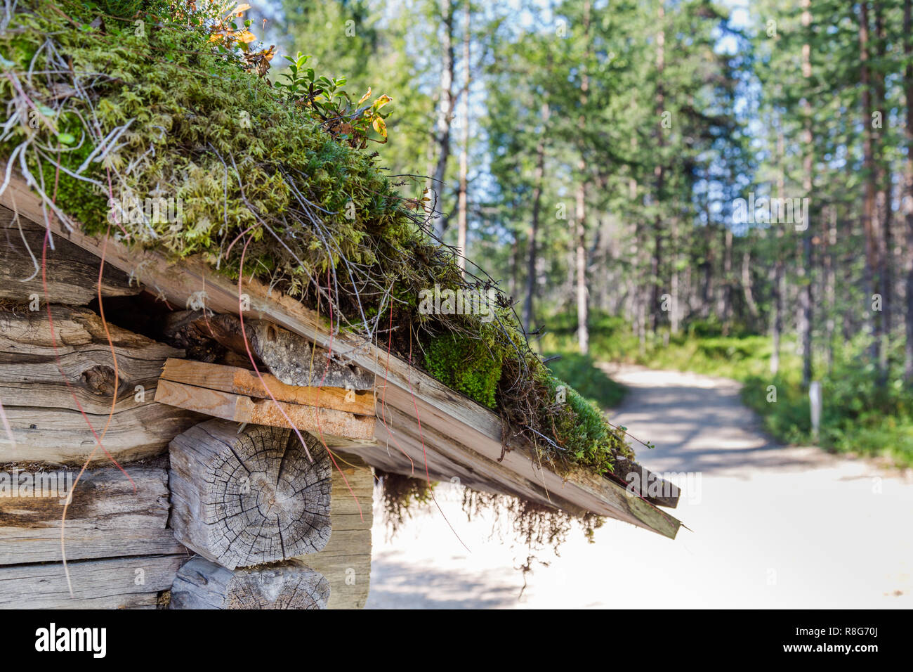 Traditional Sami loghouse with green roof in Lapland - Stock Image