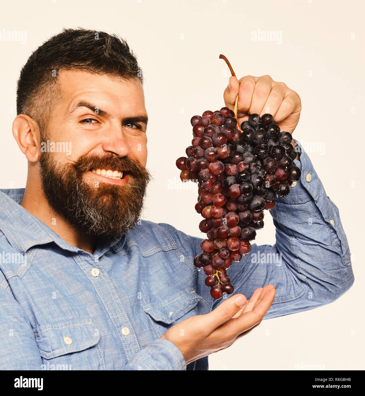 Viticulture and gardening concept. Winegrower with tricky smiling face holds cluster of grapes. Farmer shows his harvest. Man with beard holds bunch of black grapes isolated on white background - Stock Image