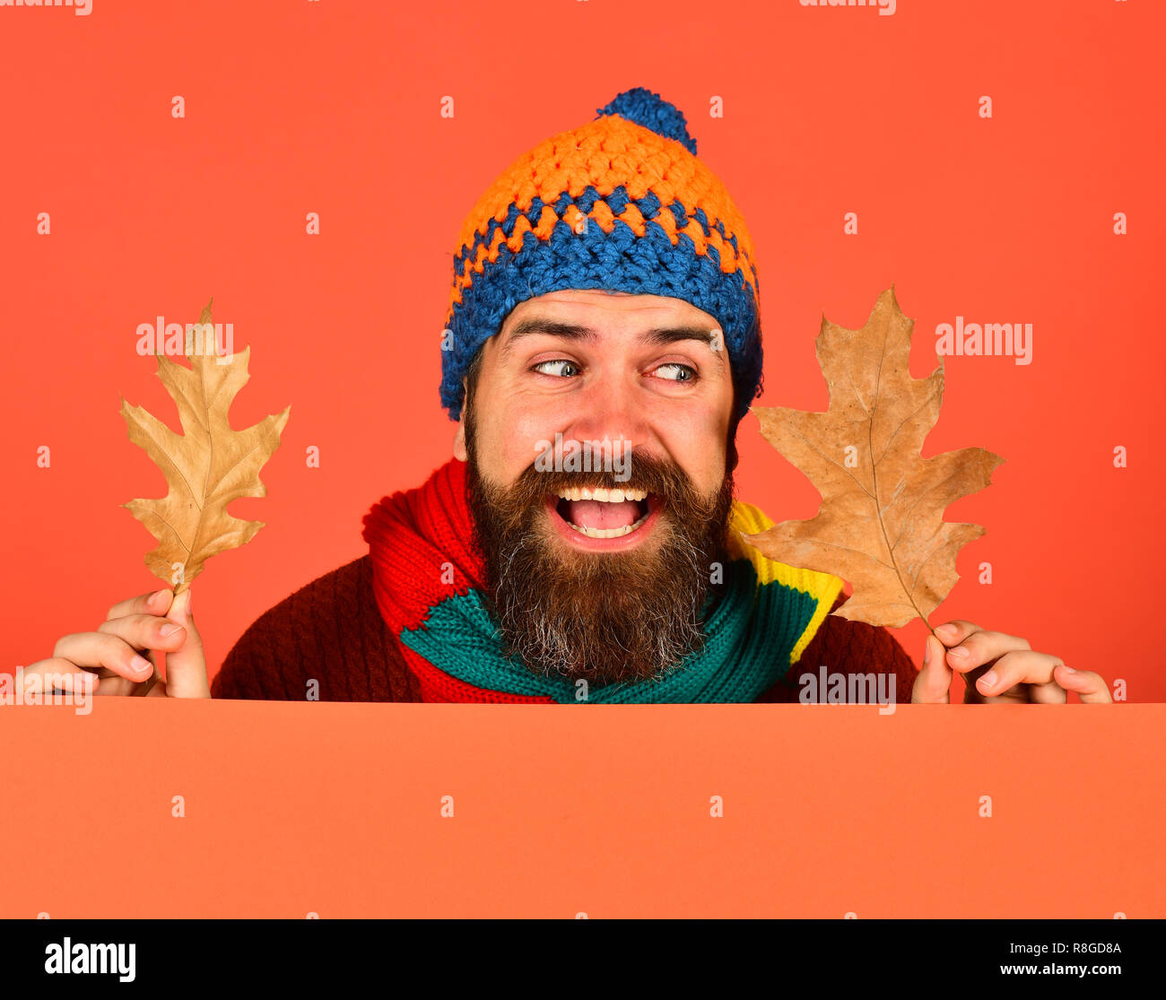 Autumn and cold weather concept. October and November time idea. Man in warm hat holds oak tree leaves on peachy orange background, copy space. Hipster with beard and tricky smile wears warm clothes - Stock Image