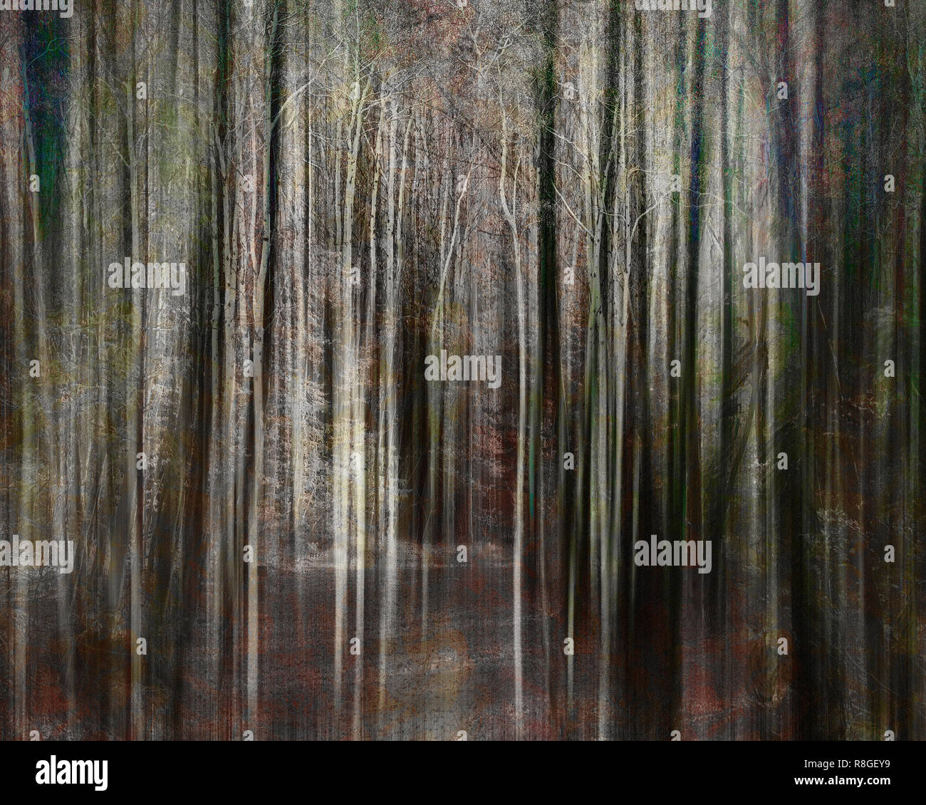 DIGITAL ART: The Darkness of a Forest - Stock Image