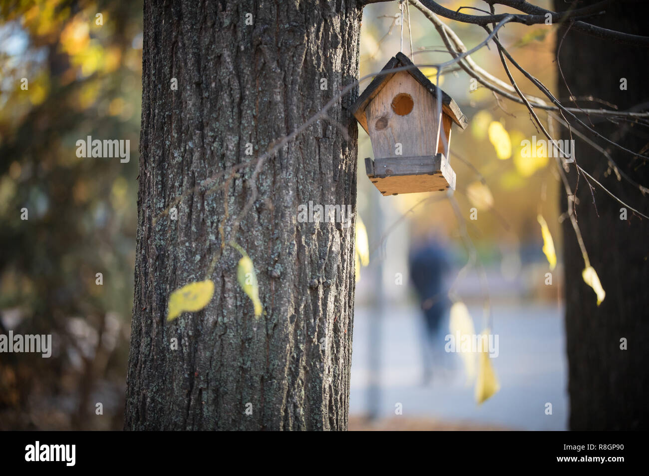 Birdhouse Hanging On A Tree In The Autumn Park