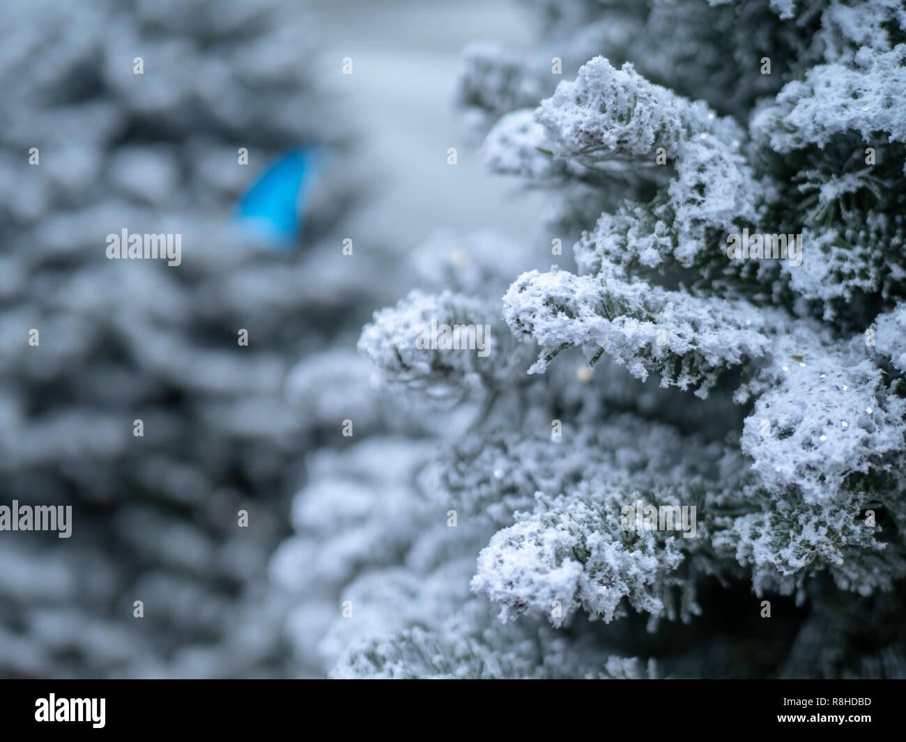 Christmas Tree Spray Snow.Close Up Of Christmas Tree Covered In White Flocking Spray