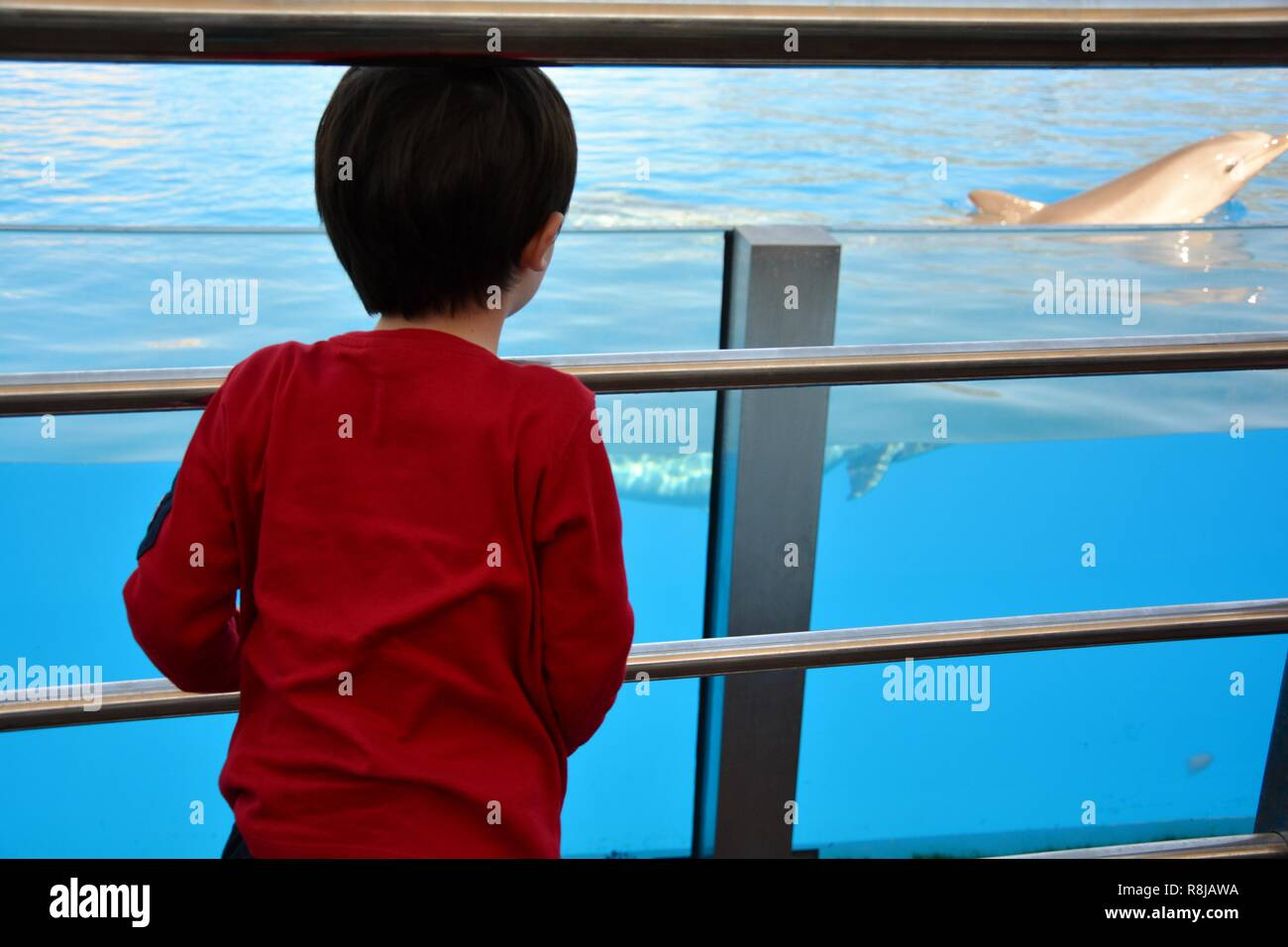 boy looking a dolphin - Stock Image