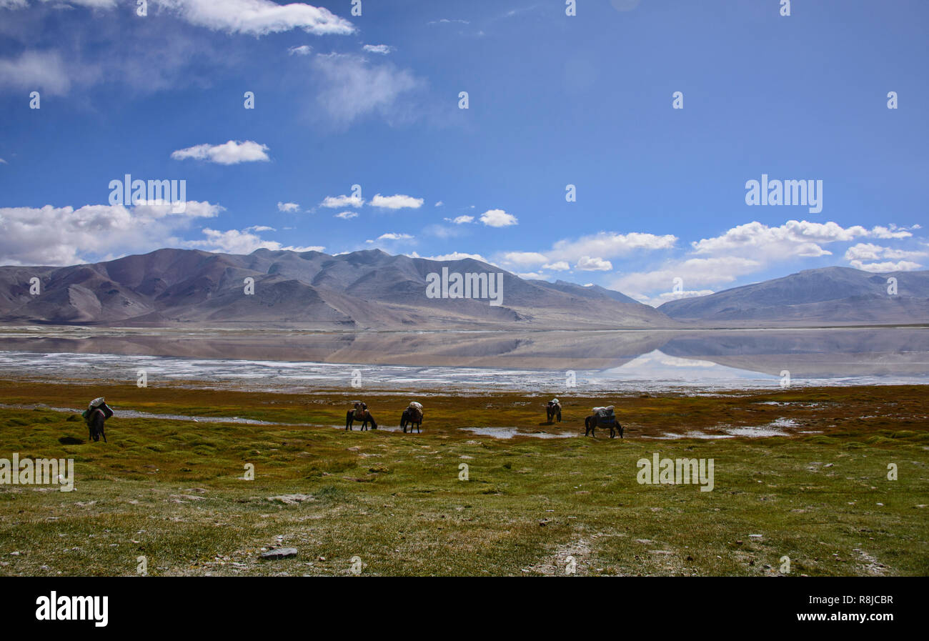 Horse trekking to Tso Moriri, Ladakh, India - Stock Image