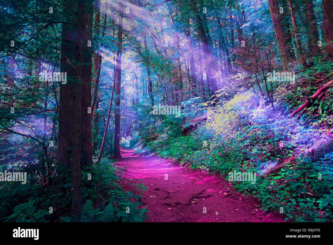 A path in the Pisgah National Forest is stylized to appear in vivid surreal colors to create a mystical quality. - Stock Image