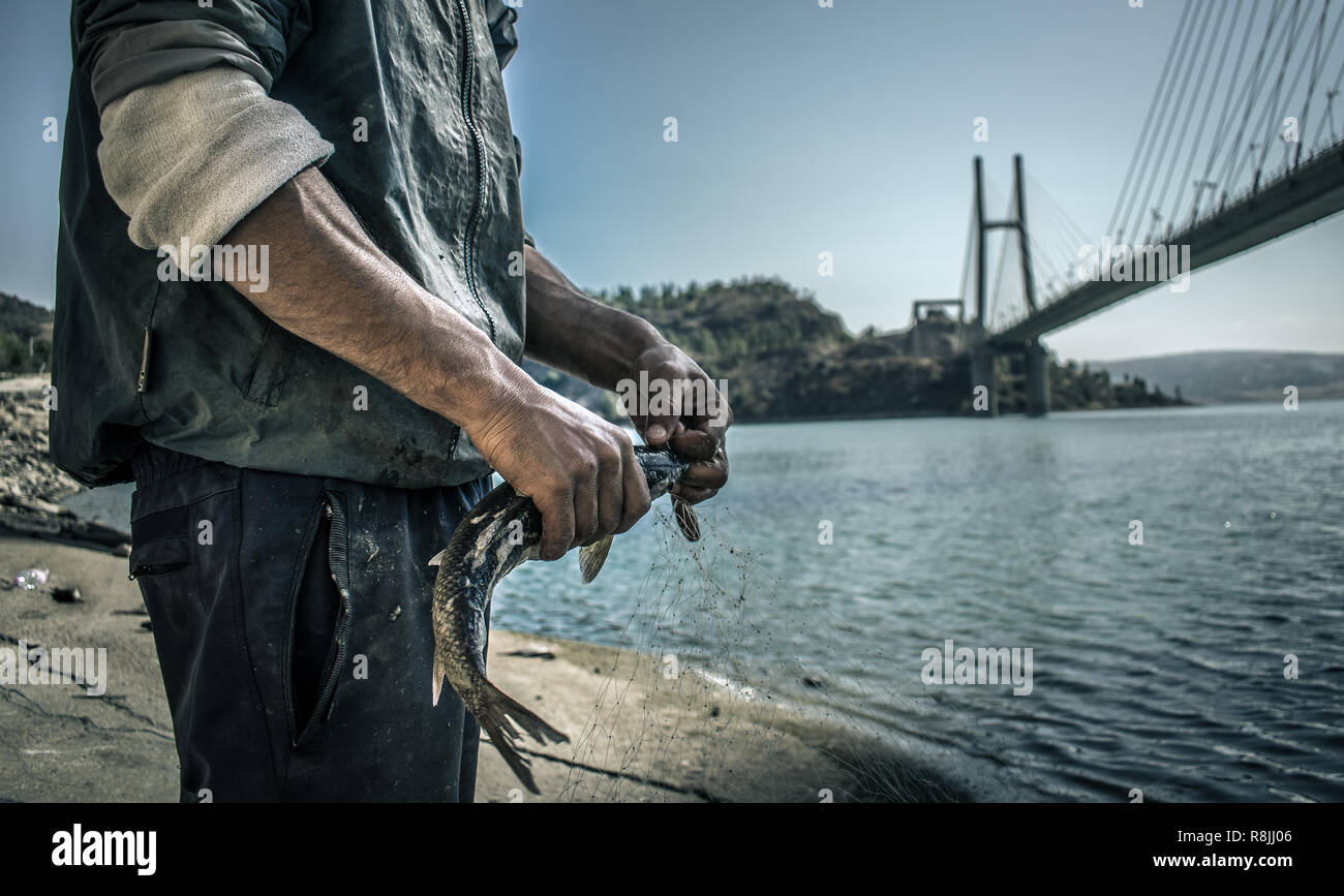 fisherman tear off the fish from the net, besides the lake - Stock Image