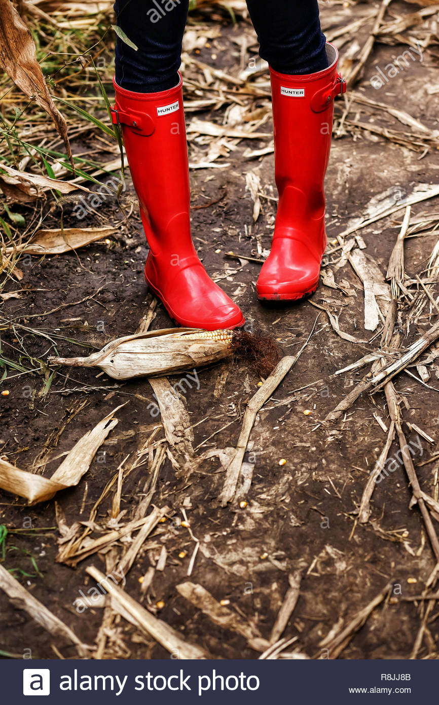 Red gum boots in a corn field - Stock Image