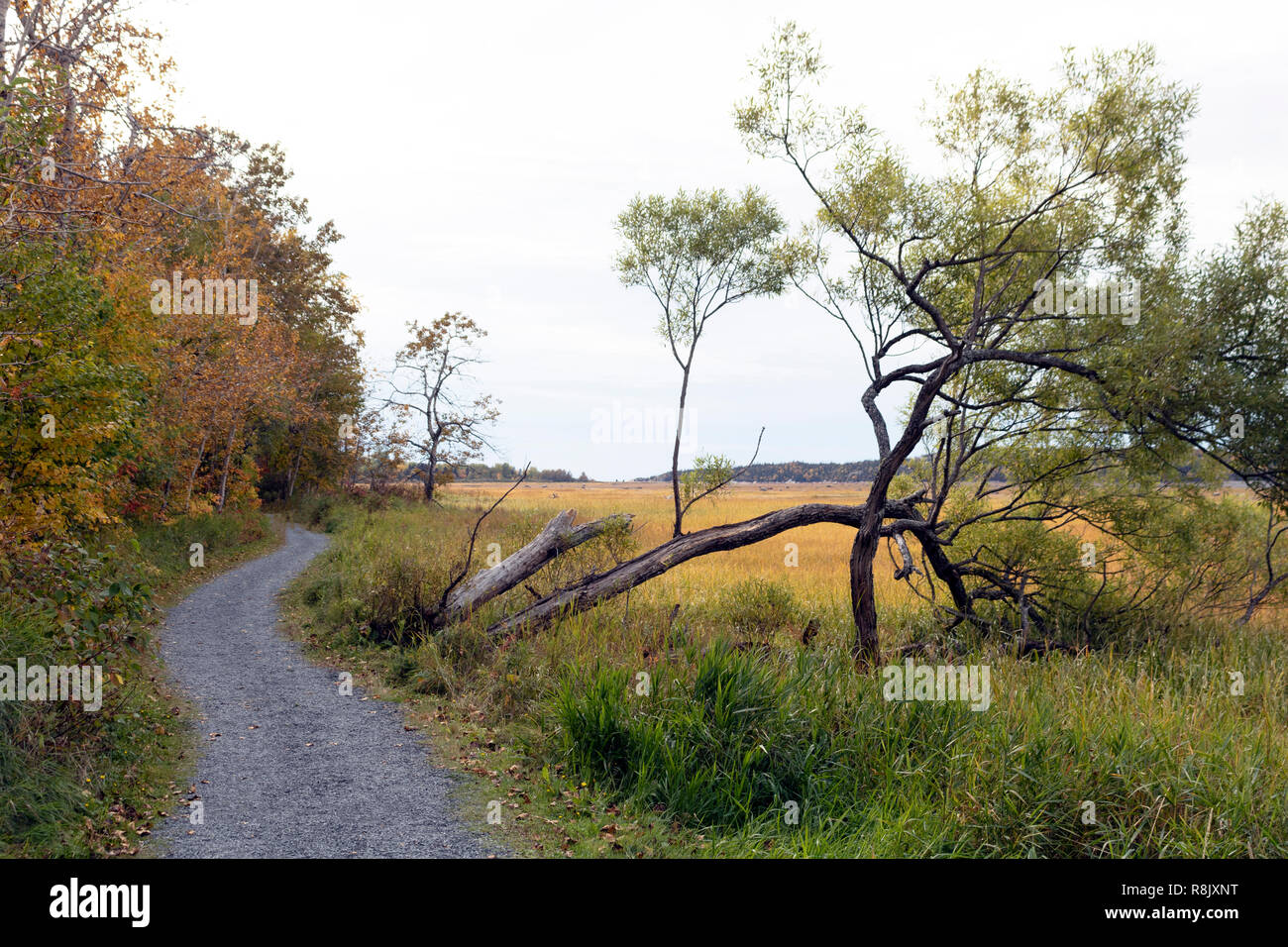 curved trail between the forest and a bent tree Stock Photo