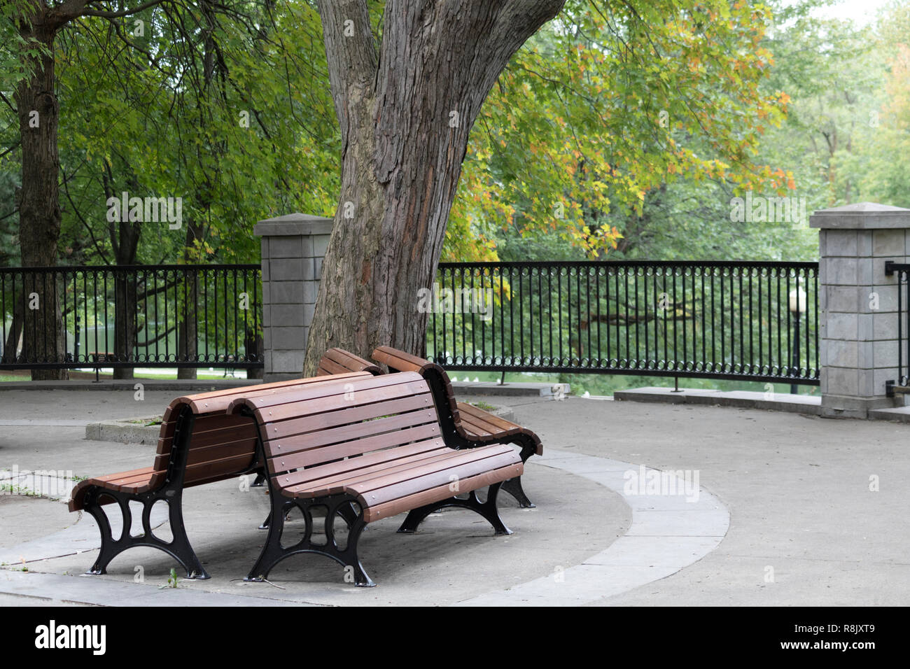 2 benches besides an big old tree in a city park Stock Photo
