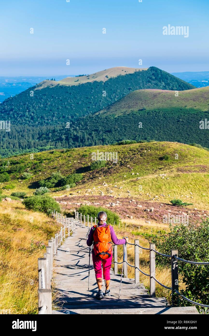 France, Puy-de-Dome, UNESCO World Heritage site, regional nature reserve of Auvergne Volcanoes, panoramic view over the Chaine des Puys from the Goats trail going to the top of Puy de Dome (alt :1465m), Puy de Come and Grand Suchet - Stock Image