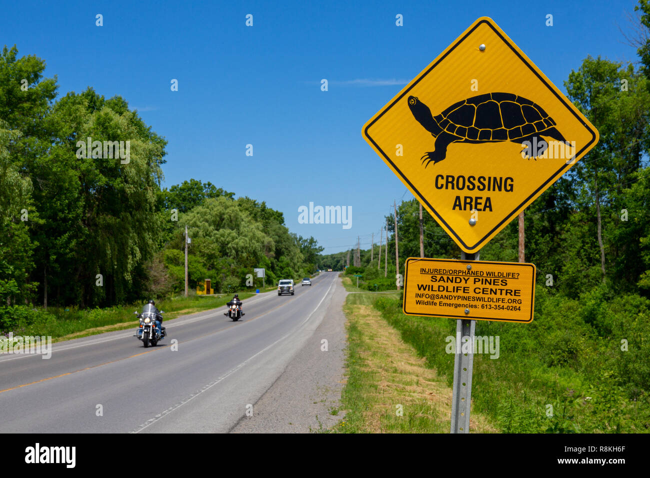 Canada, Province of Ontario, Prince Edward County, road sign for passing turtles - Stock Image