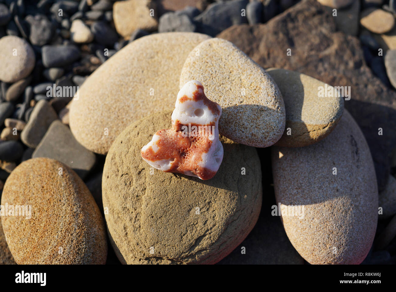 A heap of sea stones of different shapes on the seashore. Foreground is a white coral stone with brown stakes. Far East of Russia, Vladivostok - Stock Image