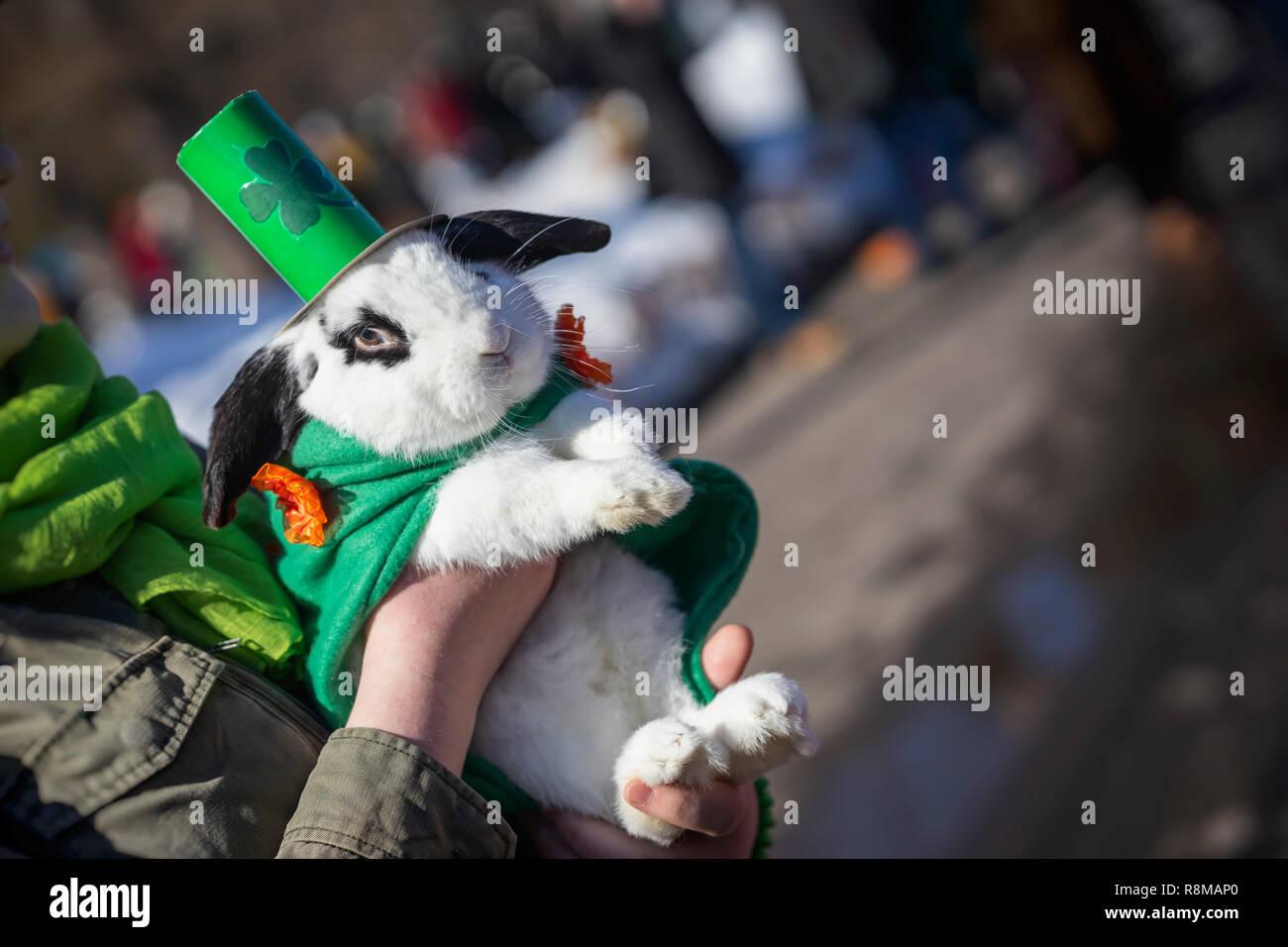 7f69aeceb Portrait of pretty, sweet rabbit close-up in green Irish hat, saint ...