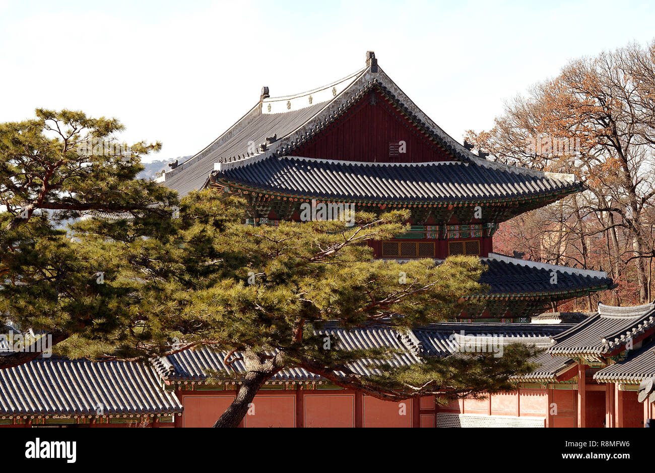 Hipped roofs, tiles, painted decorations, hermits, monks and monsters on the roof as guardians, typical Korean palatial architecture with Korean pine - Stock Image