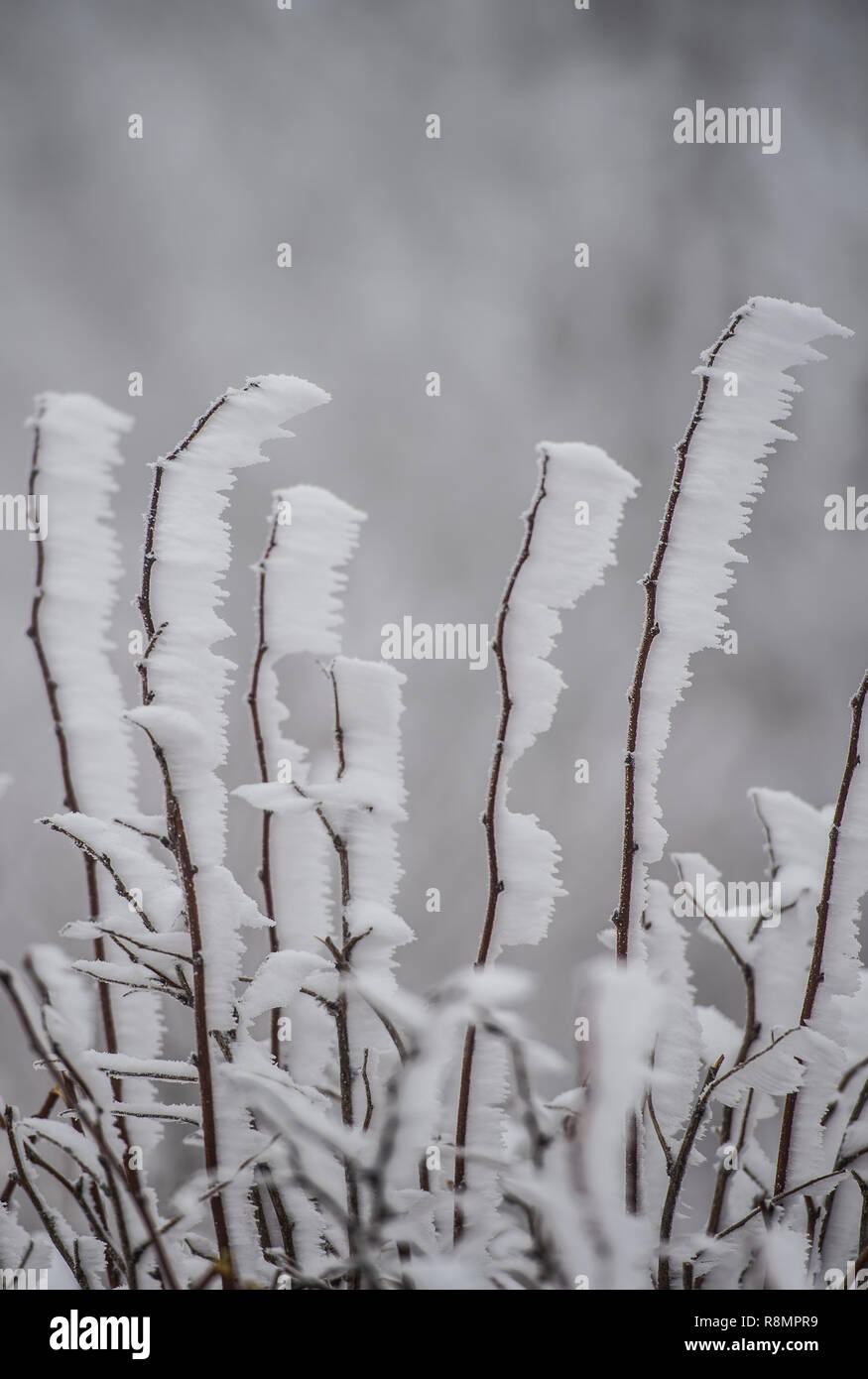 Schmitten, Germany. 16th Dec, 2018. Wind and snow conjure up a bizarre coating on the branches. On the Großer Feldberg in the Taunus lies a snow cover of about three centimetres, tobogganing is just as possible. Credit: Andreas Arnold/dpa/Alamy Live News - Stock Image