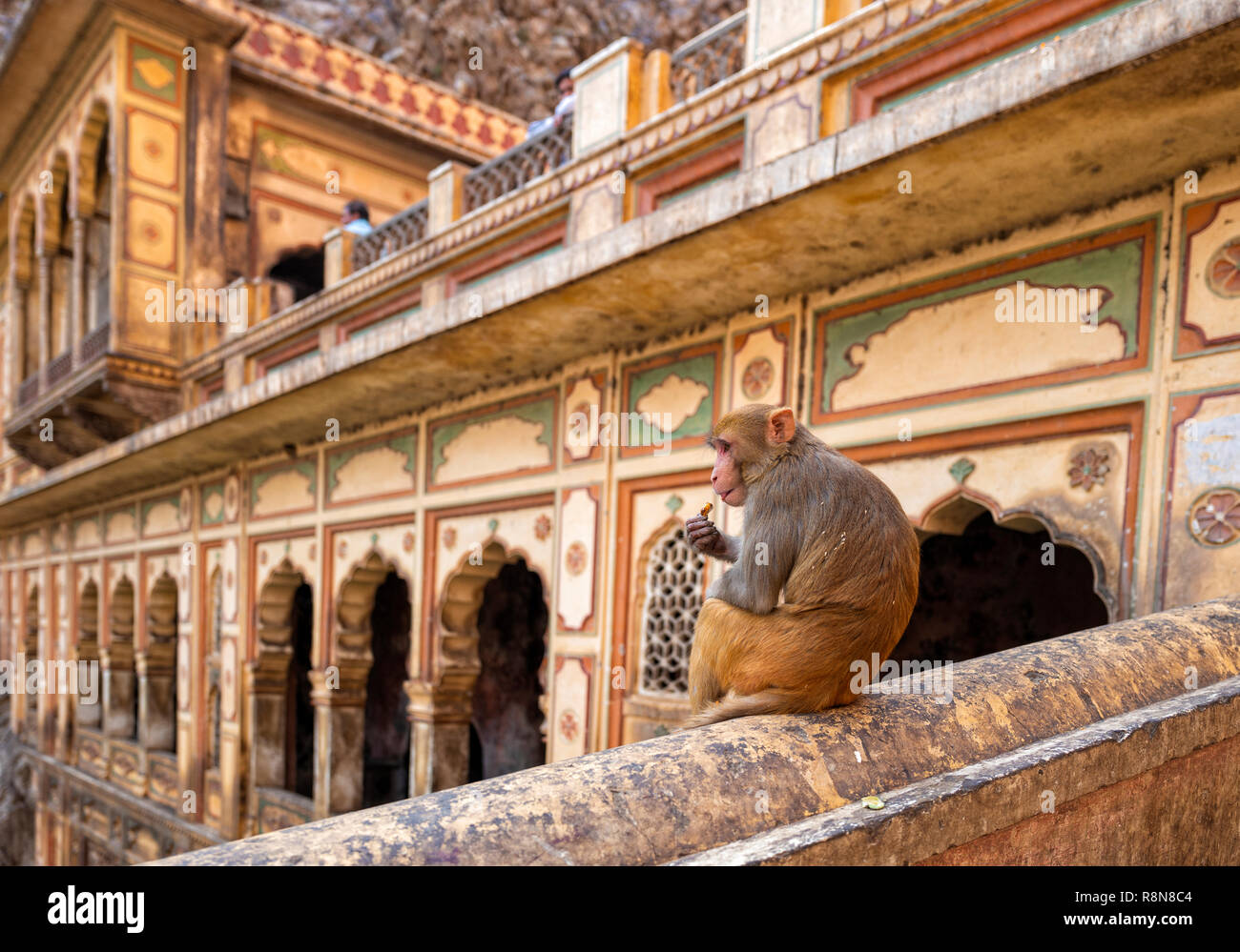 The Monkey Temple of Galtaji Jaipur India Stock Photo
