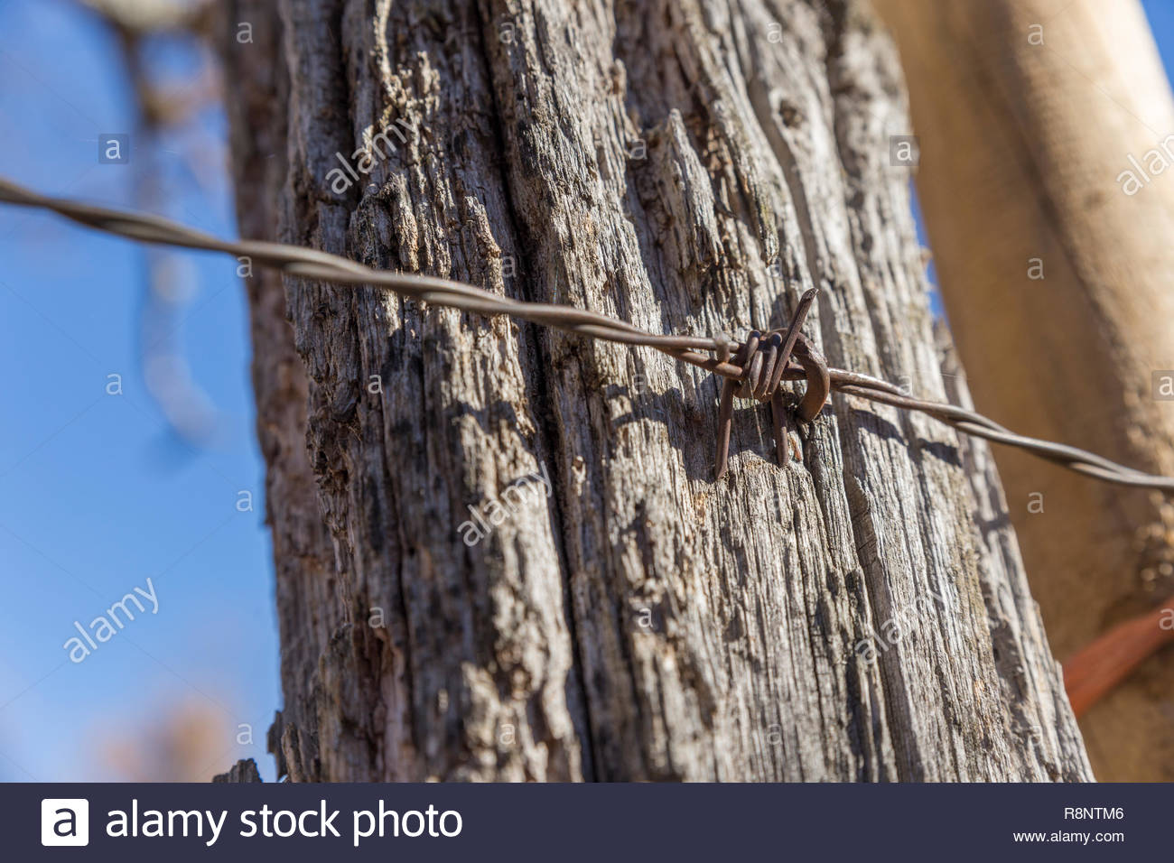 Barbed wire fence in the forest - Stock Image