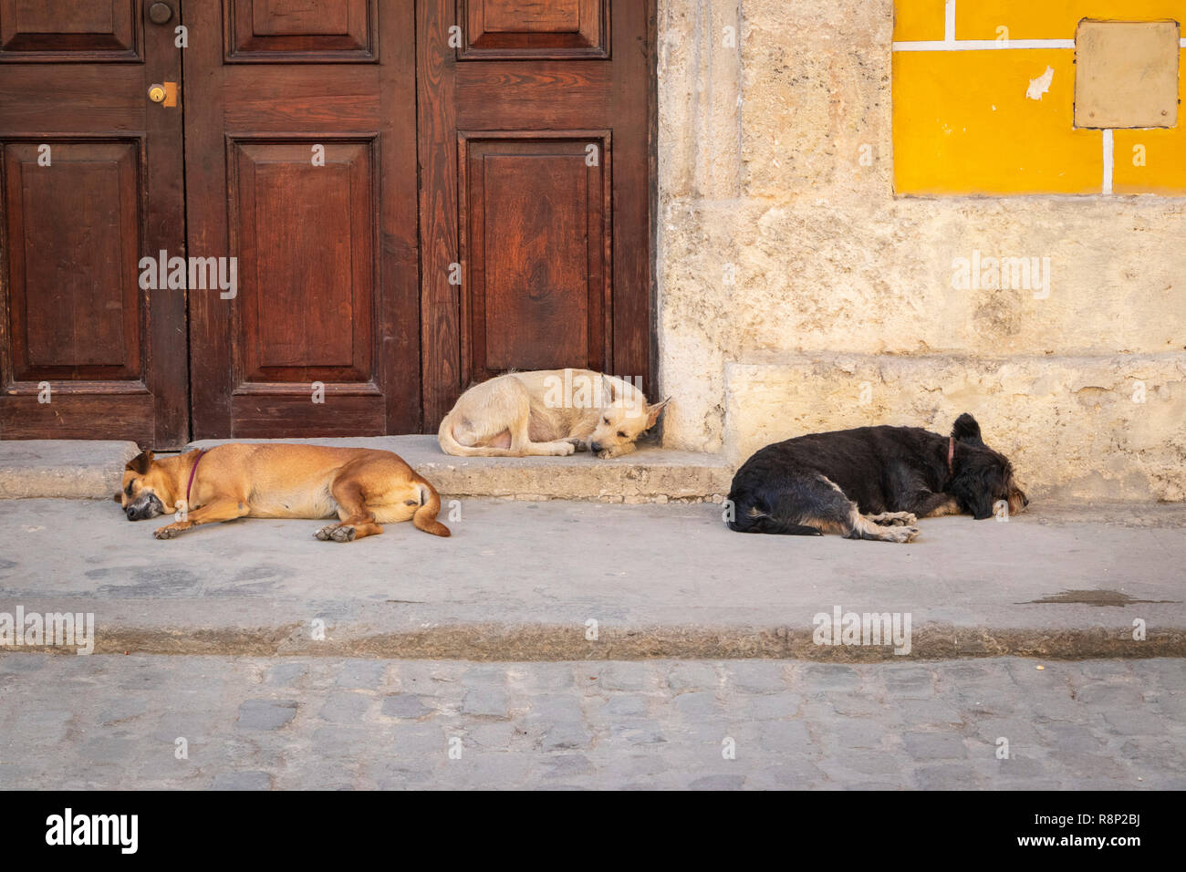 3 dogs sleeping in the heat of the day in Havana Cuba - Stock Image