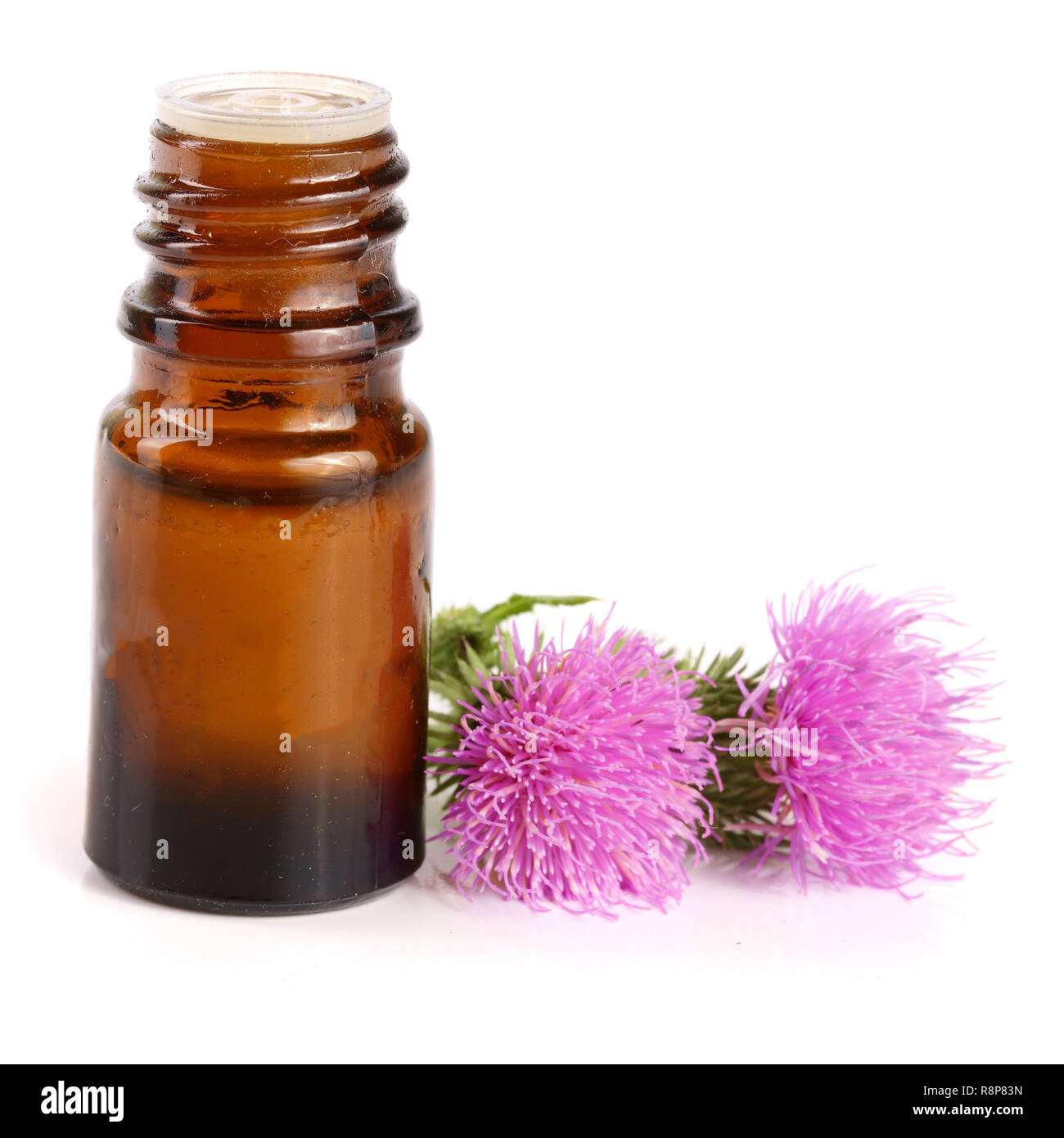 thistle oil and milk thistle flower isolated on white background - Stock Image