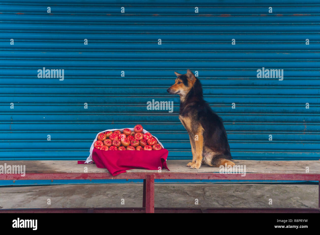 Dog And Fruit - Stock Image