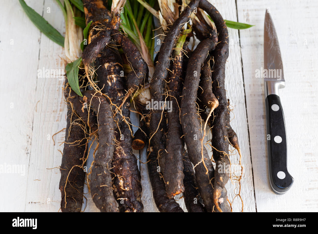 Fresh Scorzonera  (black salsify) ready for meal preparation in the kitchen. Stock Photo