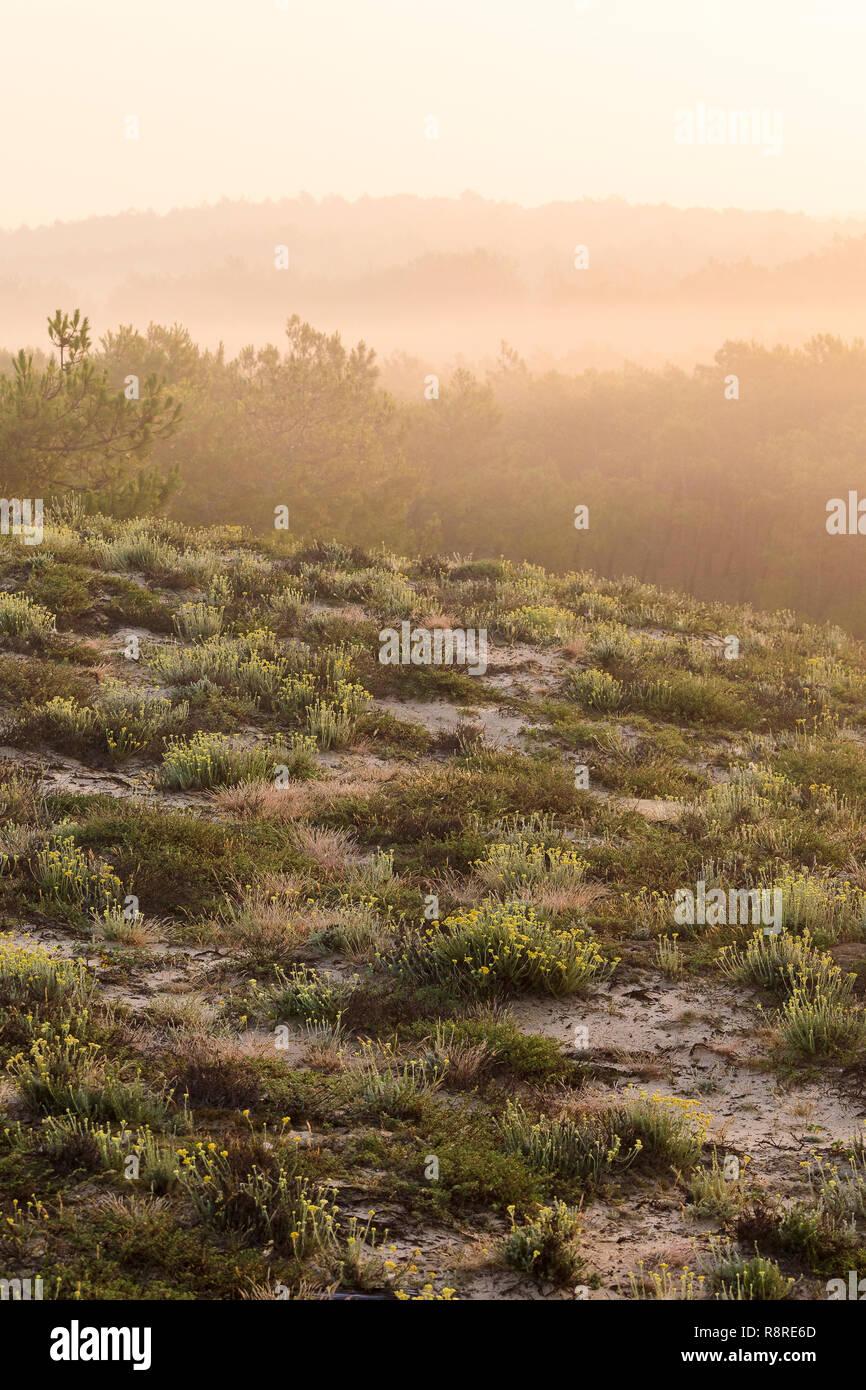 Truc Vert, Cap Ferret, France - Stock Image
