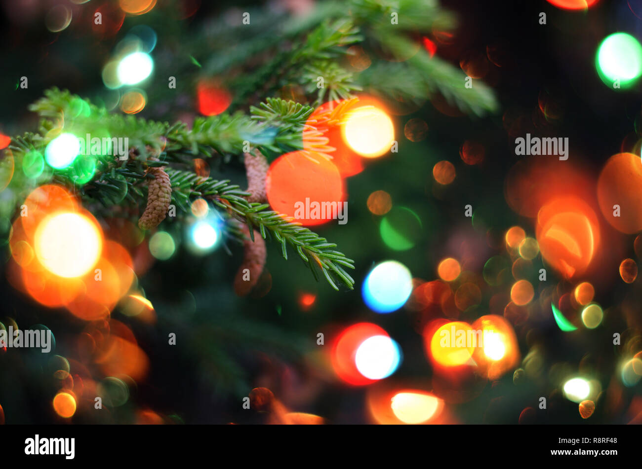 Christmas holiday background. Christmas fir tree against