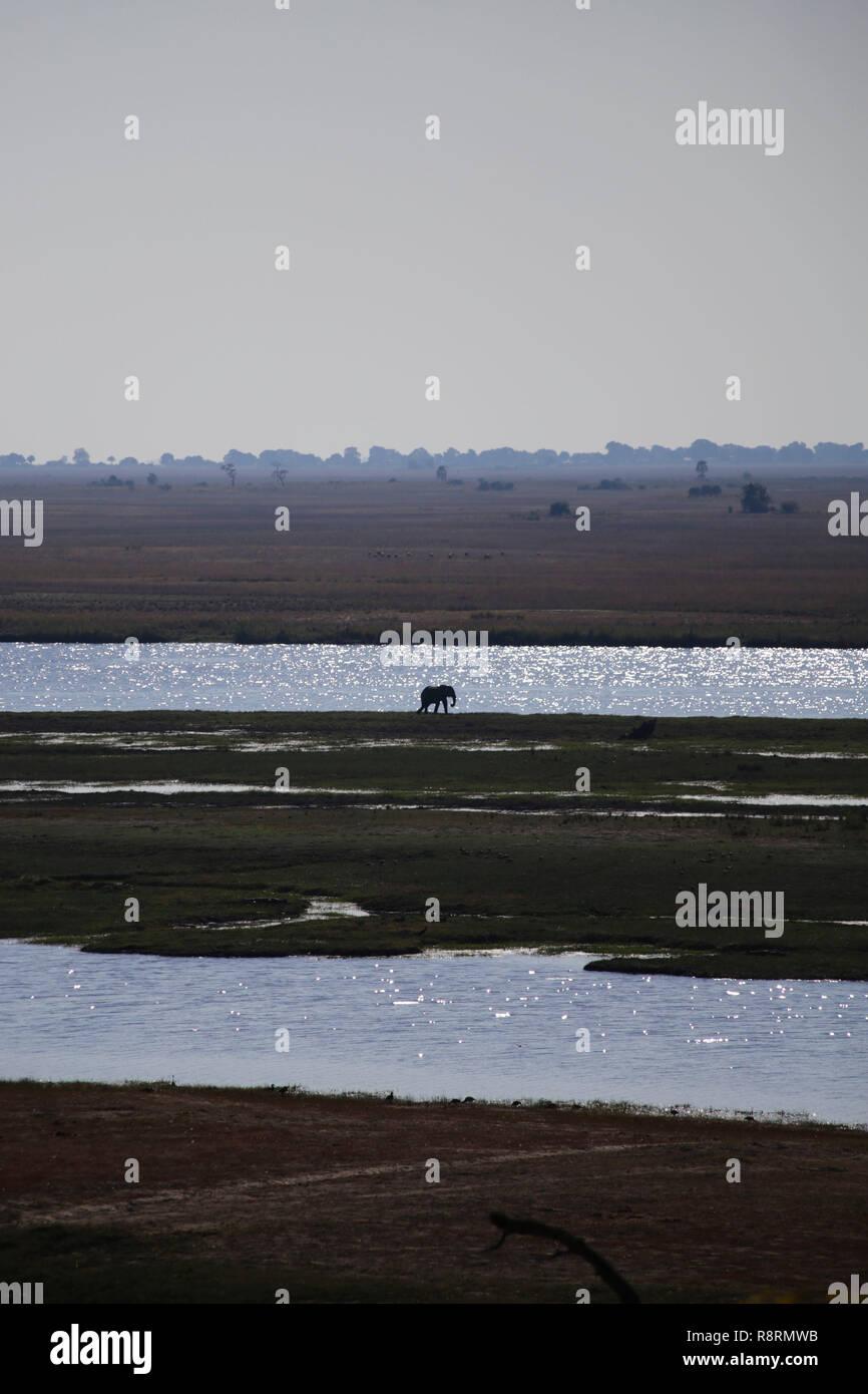 Solitary elephant on African plain, Botswana. - Stock Image