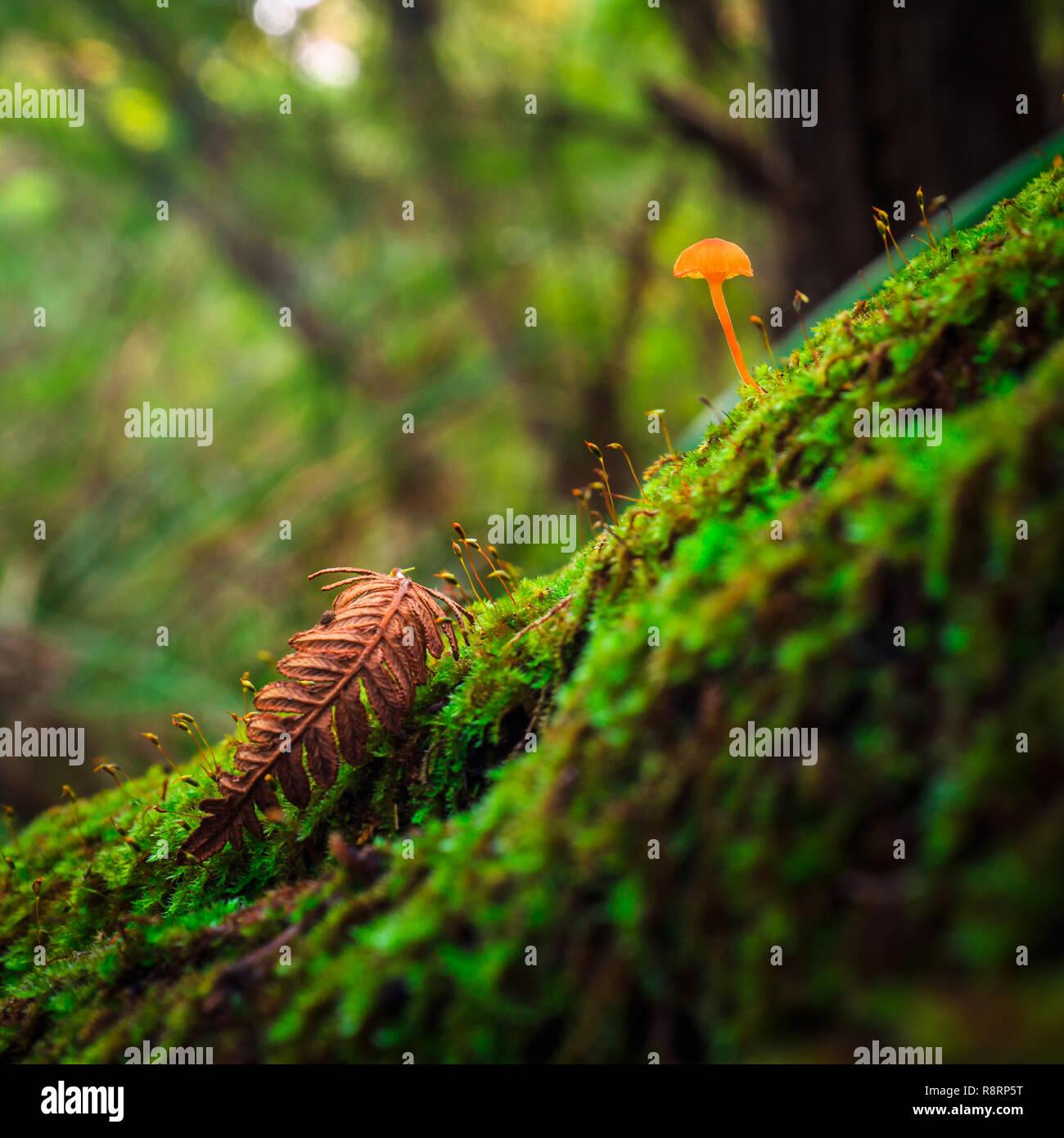 Forest Mushroom - Stock Image