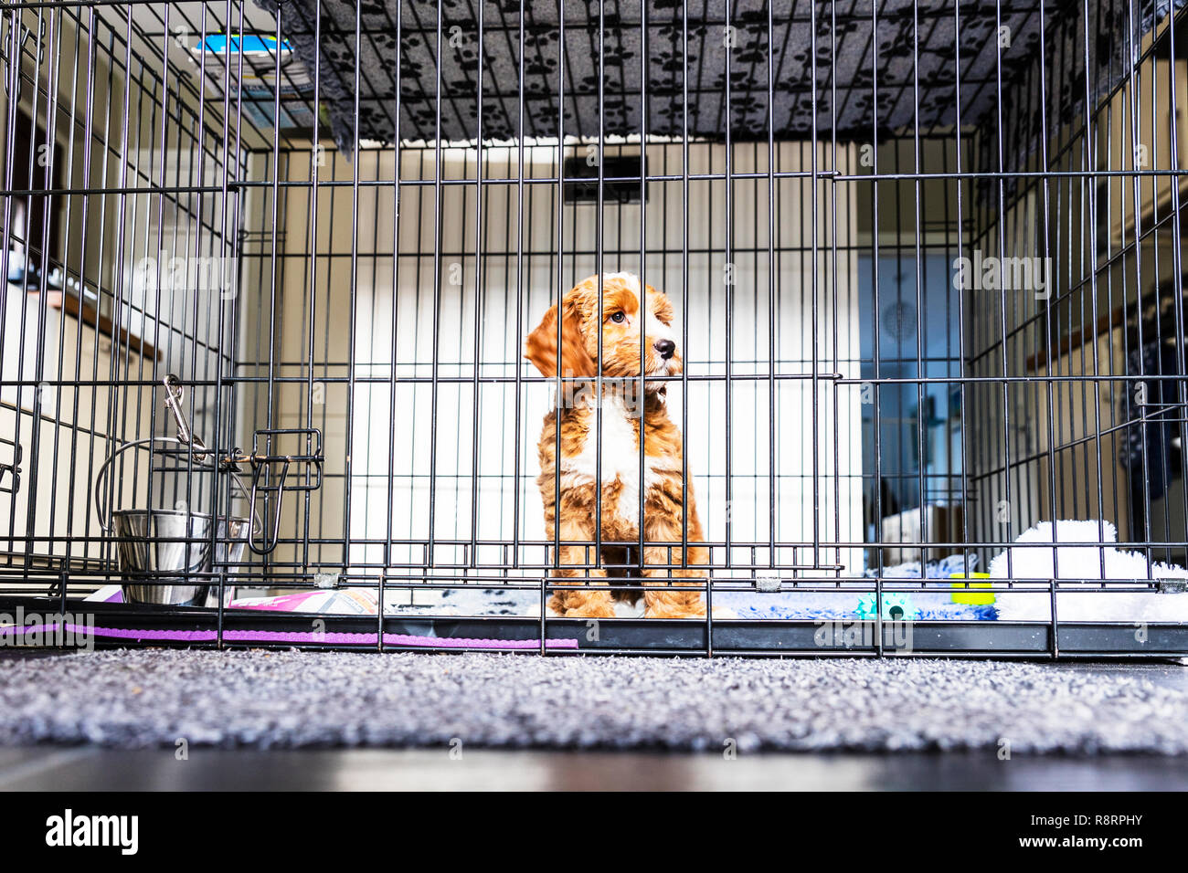 Dog in cage, puppy in cage, dog in crate, puppy in crate, puppy crate, dog crate, puppy cage, puppy crate, caged dog, puppy farm, puppy farming, dog Stock Photo