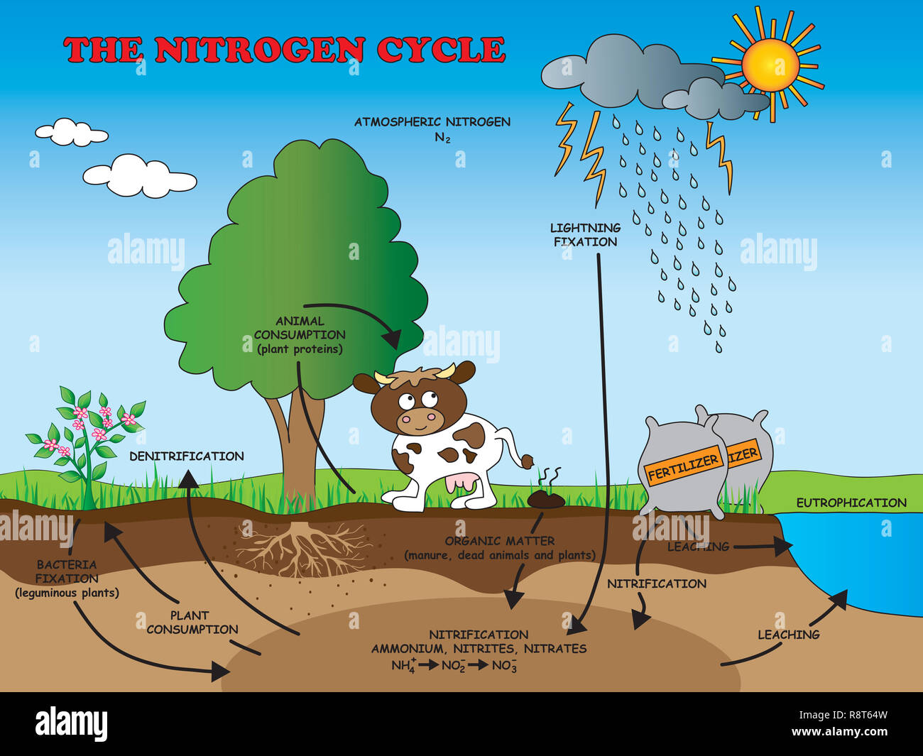 illustration of nitrogen cycle for school - stock image
