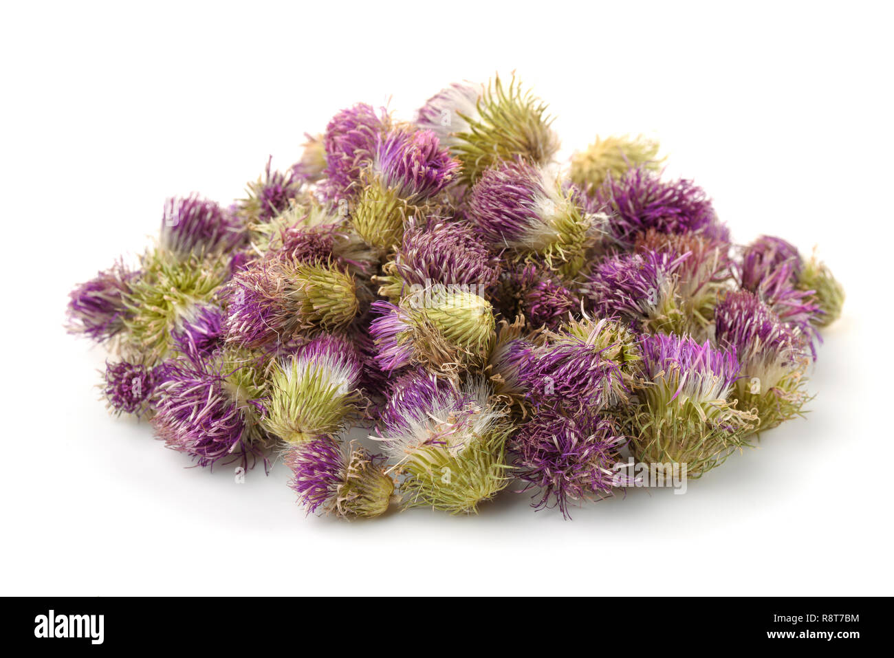 Pile of dried cotton thistle flowers isolated on white - Stock Image