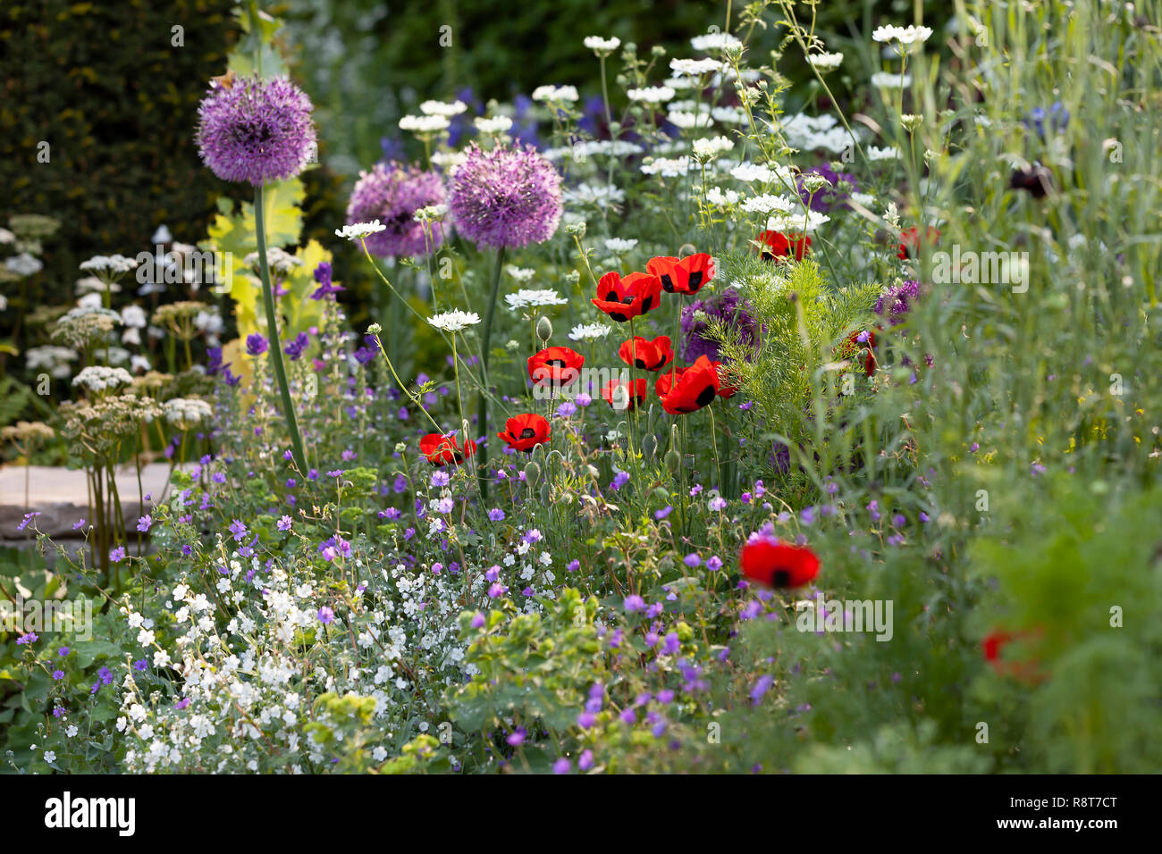 Wild Spring Flowers Growing In The Garden Poppy And Stock Photo