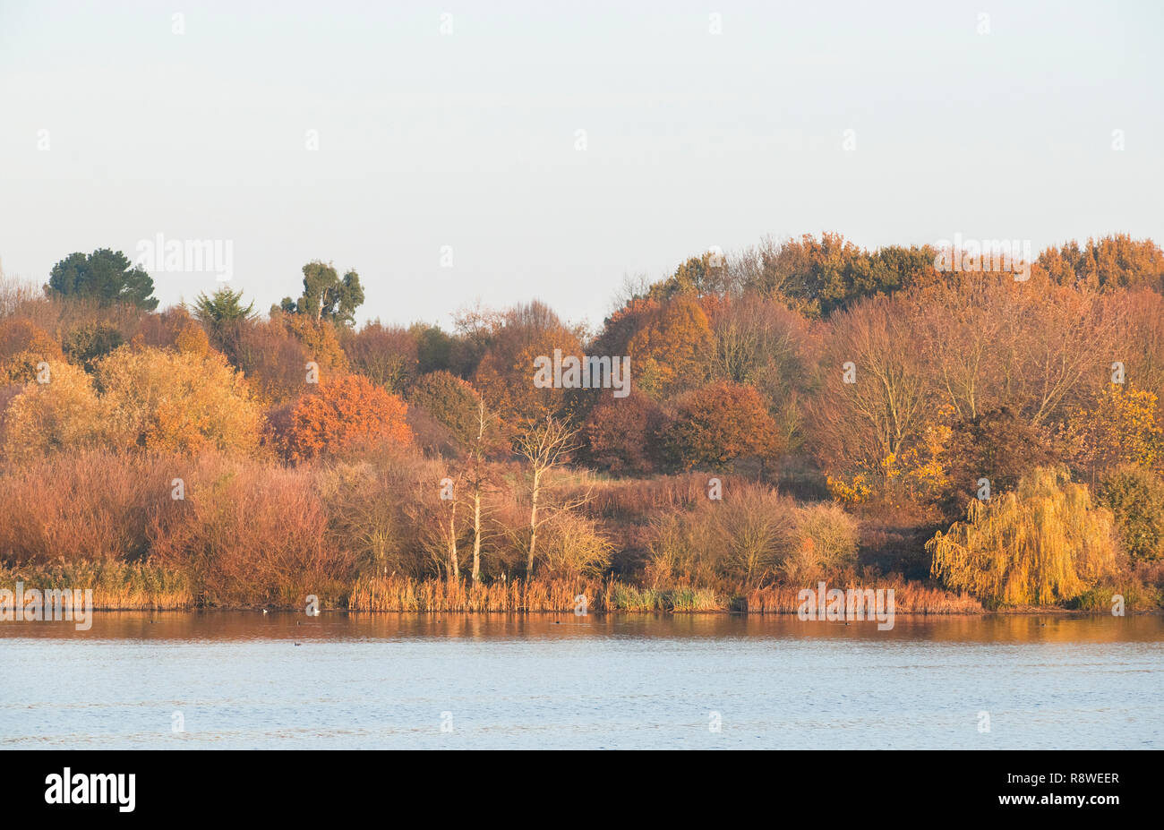 autumn trees beside Brent Reservoir, also known as Welsh Harp Reservoir, SSSI reserve, Brent, London, United Kingdom Stock Photo