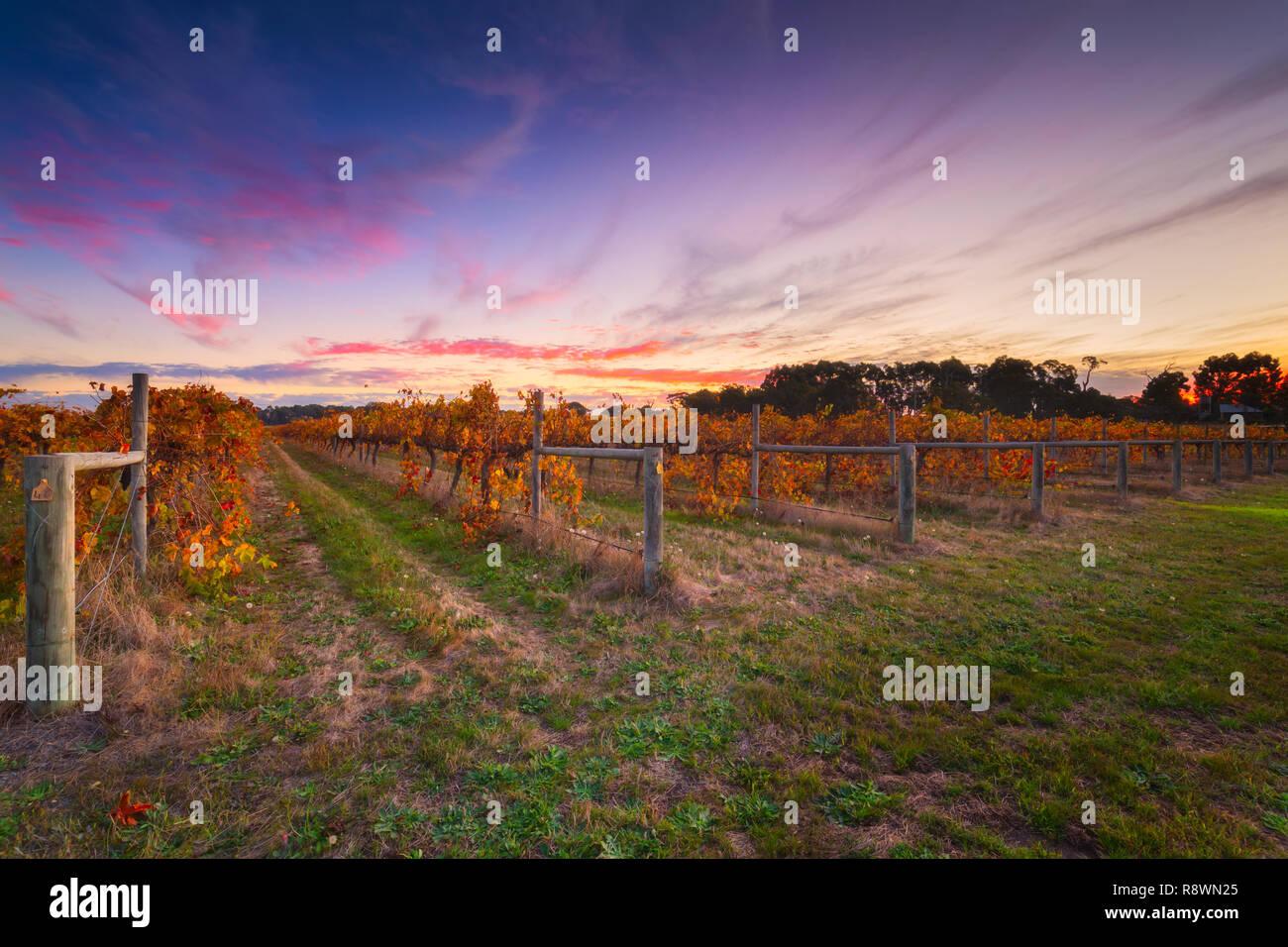 Fall Foliage In Winery - Stock Image