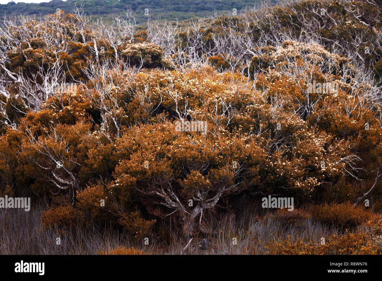 tree foliage - Stock Image