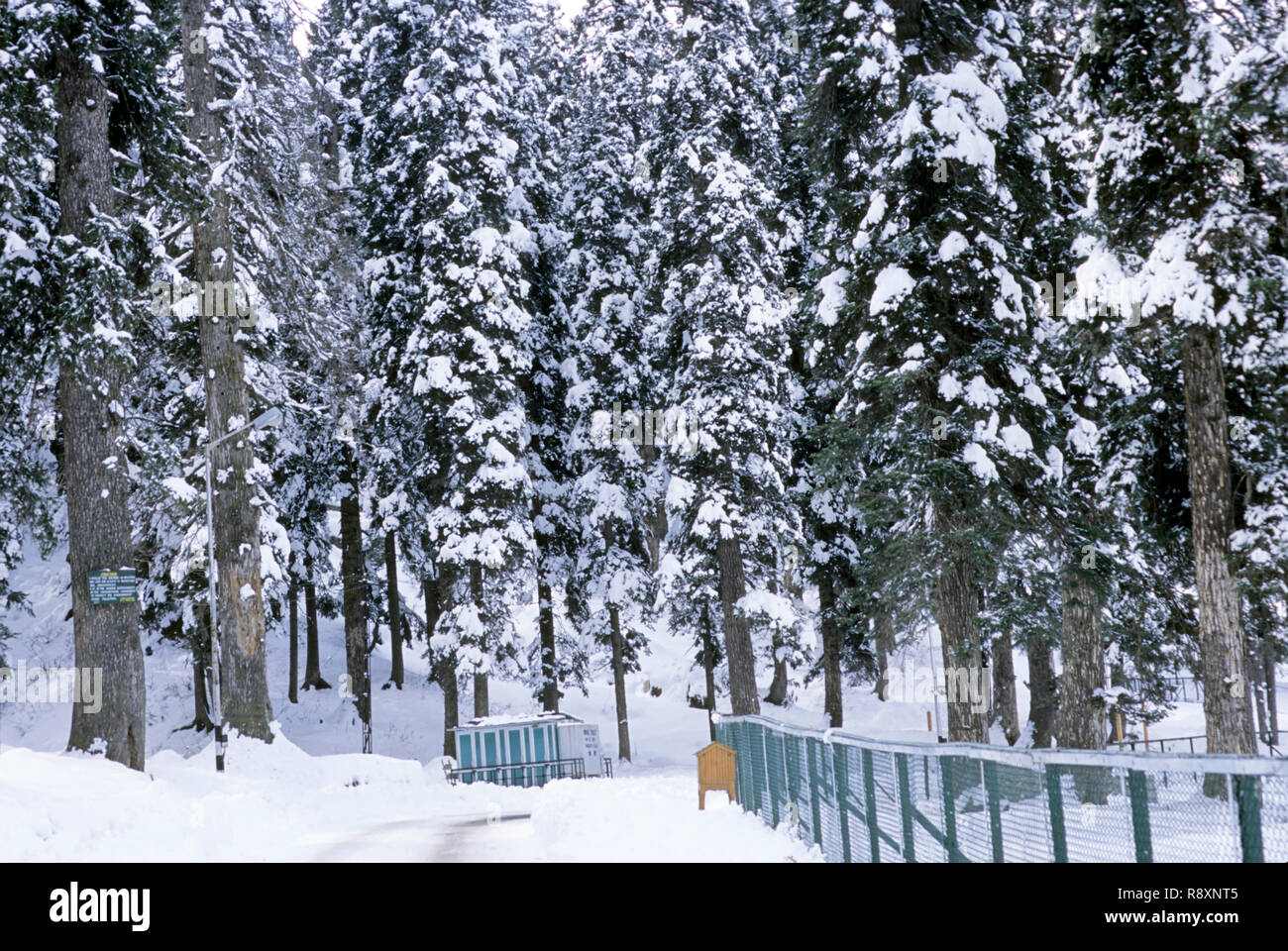 winter season, snowfall in gulmarg, jammu and kashmir, india