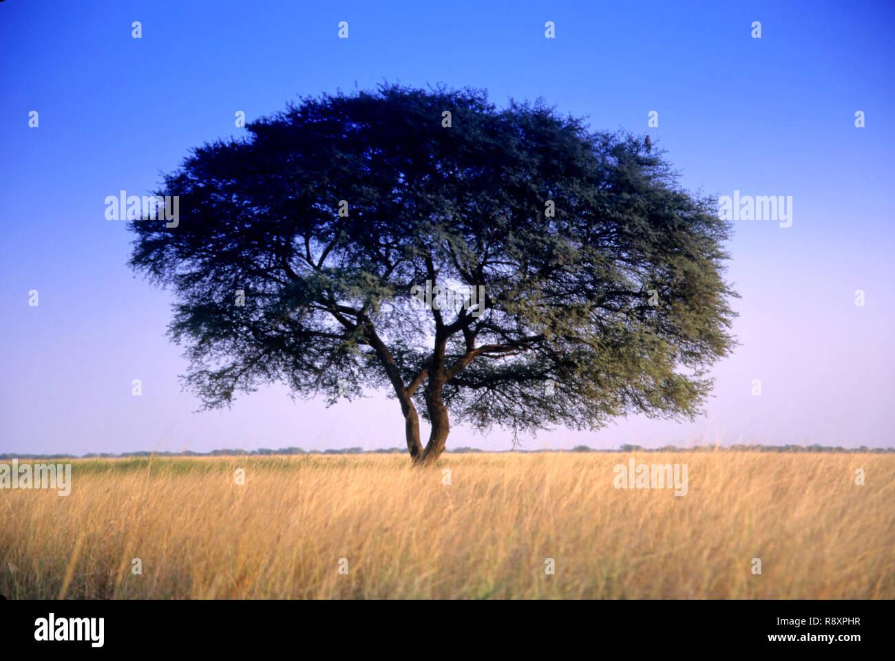 Single tree - Stock Image