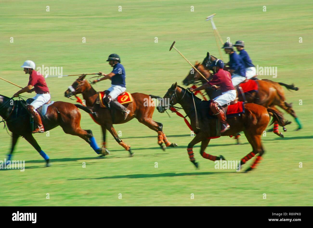 Polo - Stock Image