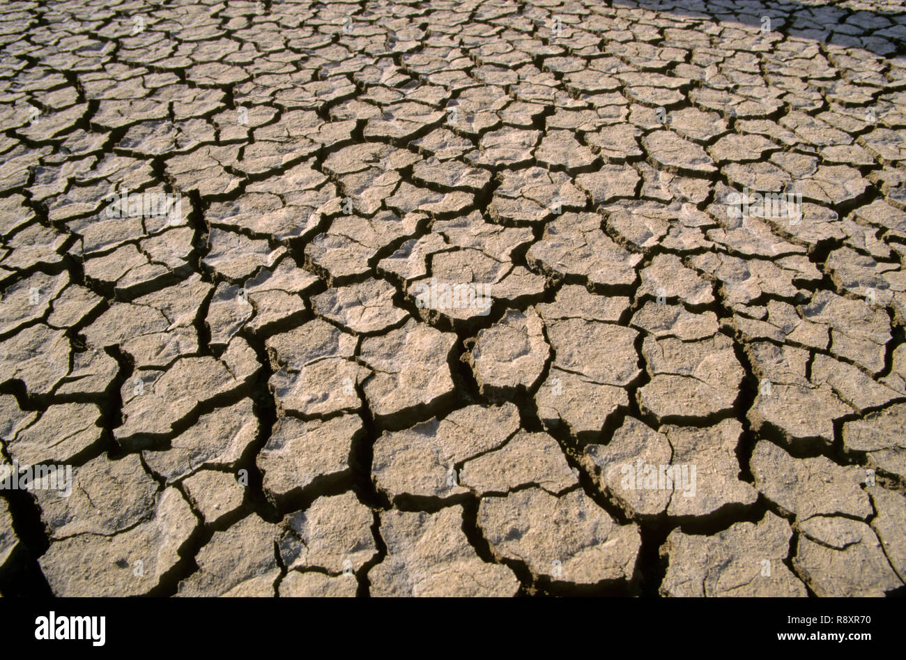 Cracked Earth - Stock Image