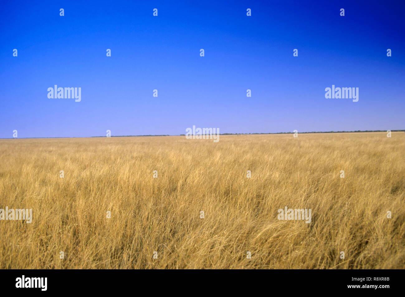 Wheat Fields - Stock Image