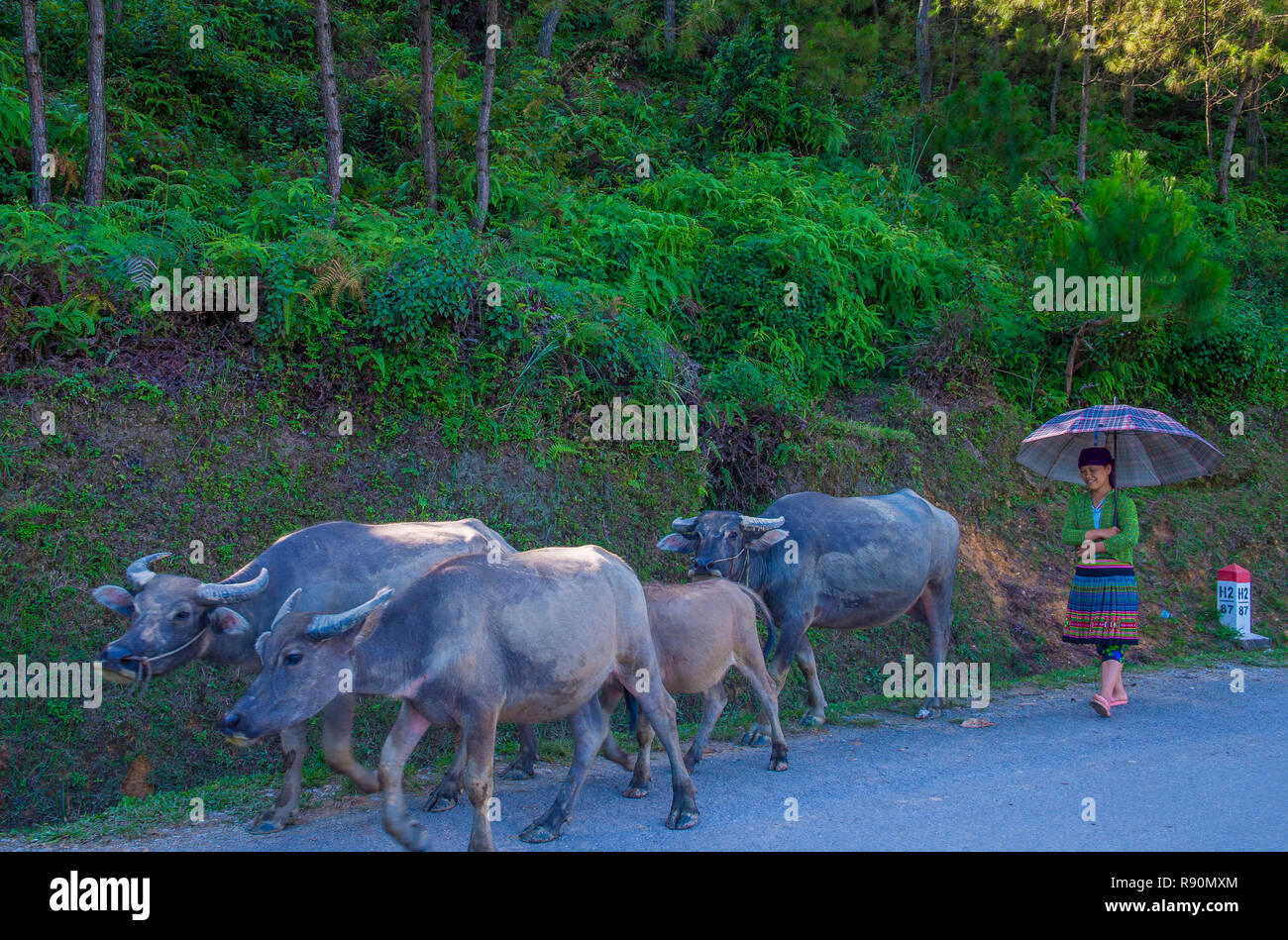 HA GIANG , VIETNAM - SEP 15 : Vietnamese farmer in the countrside near Ha Giang Vietnam on September 15 2018. nearly 80 percent of the population of V Stock Photo