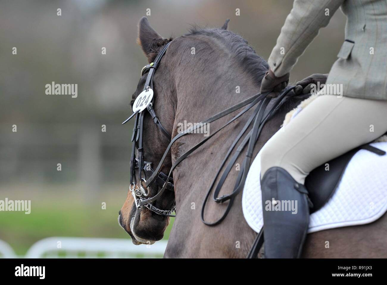 Dark Chestnut Dressage Horse Bridle Numbers 24 Dressage Horse Abstracts 08 12 2018 Stock Photo Alamy