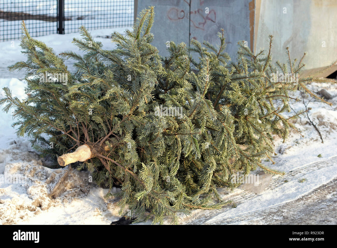 A Christmas tree was discarded at a bottle bank - Stock Image