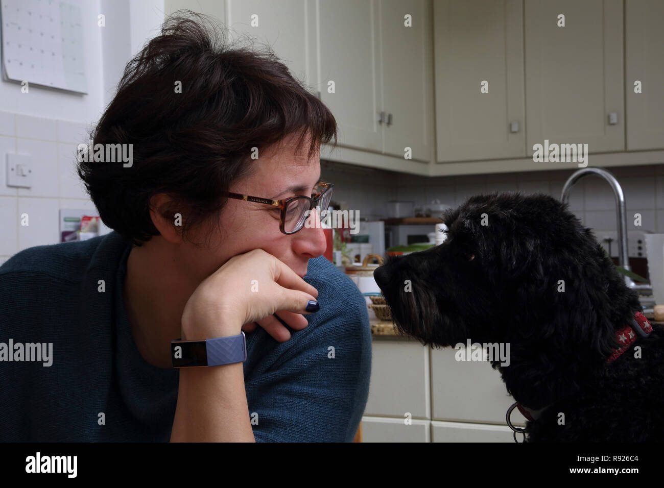 Woman and Cockapoo Dog Looking at each other Surrey England - Stock Image