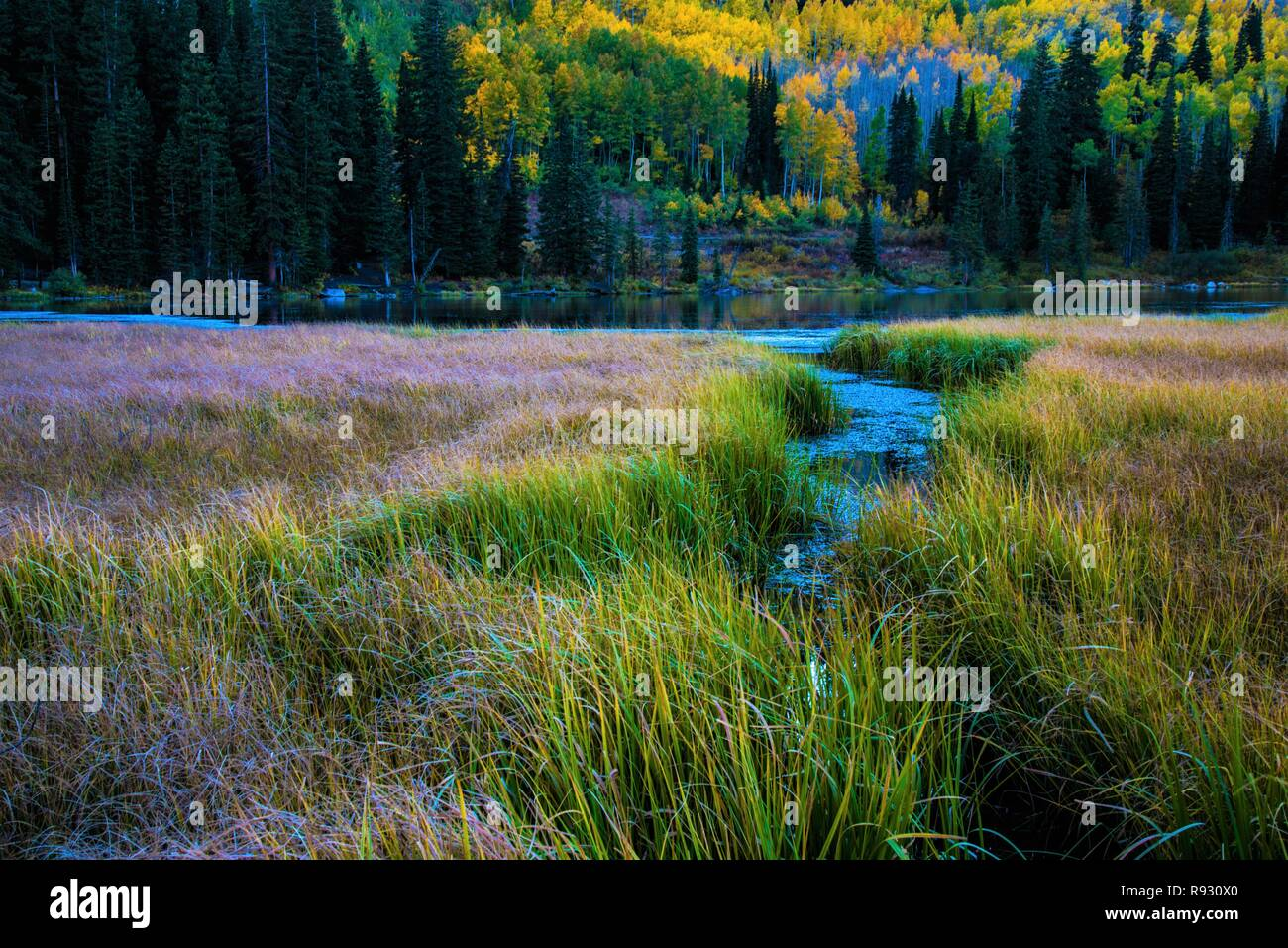 Mountain meadow stream with beautiful Autumn colors. Stock Photo