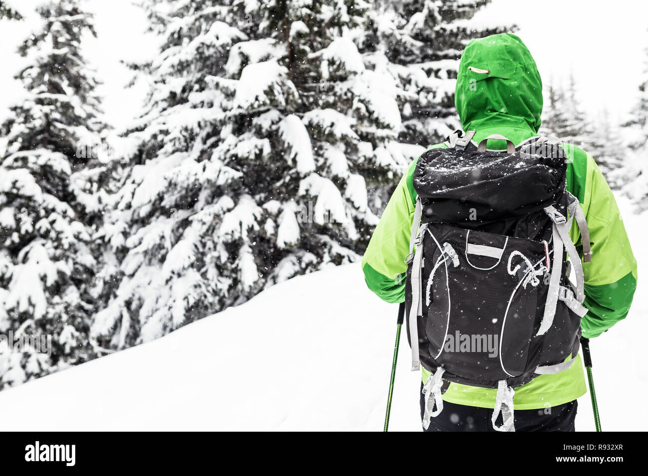 Winter trek in white snowy forest. Man hiking in winter woods. Travel and healthy lifestyle outdoors in beautiful nature. - Stock Image